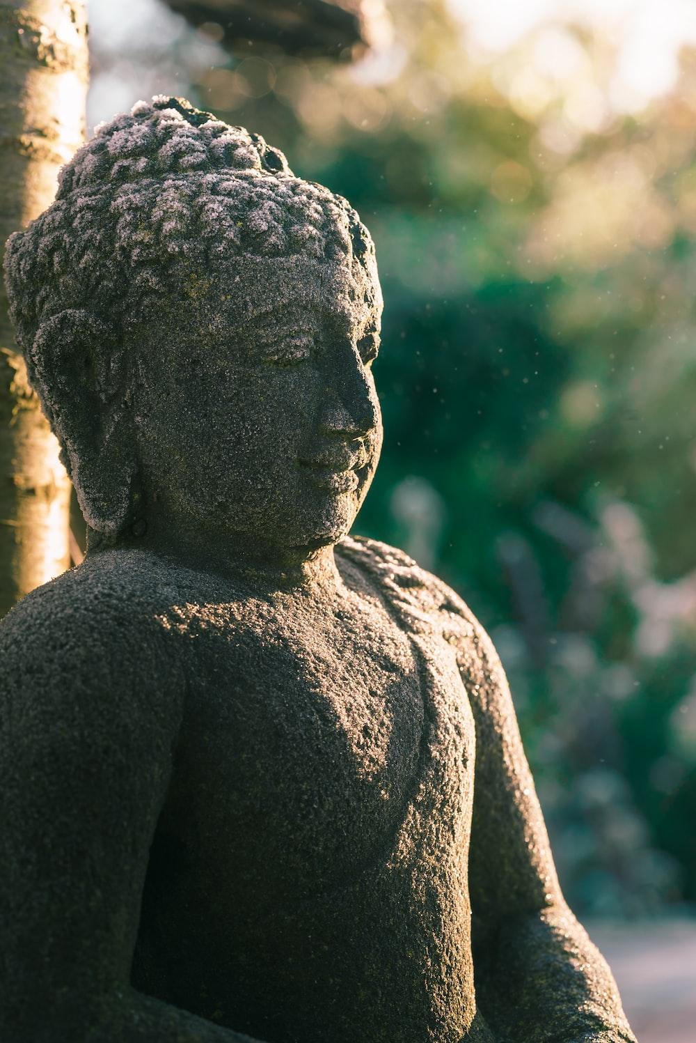 shallow focus photography of Gautama