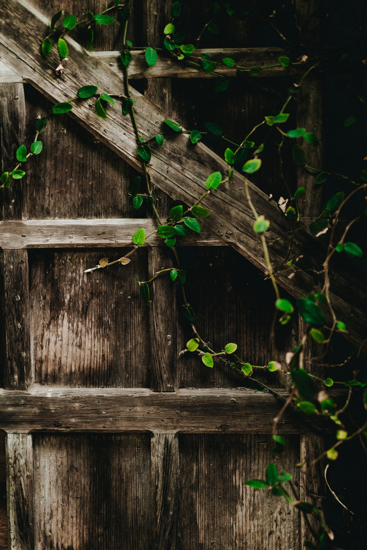 green vine plants on gray wall
