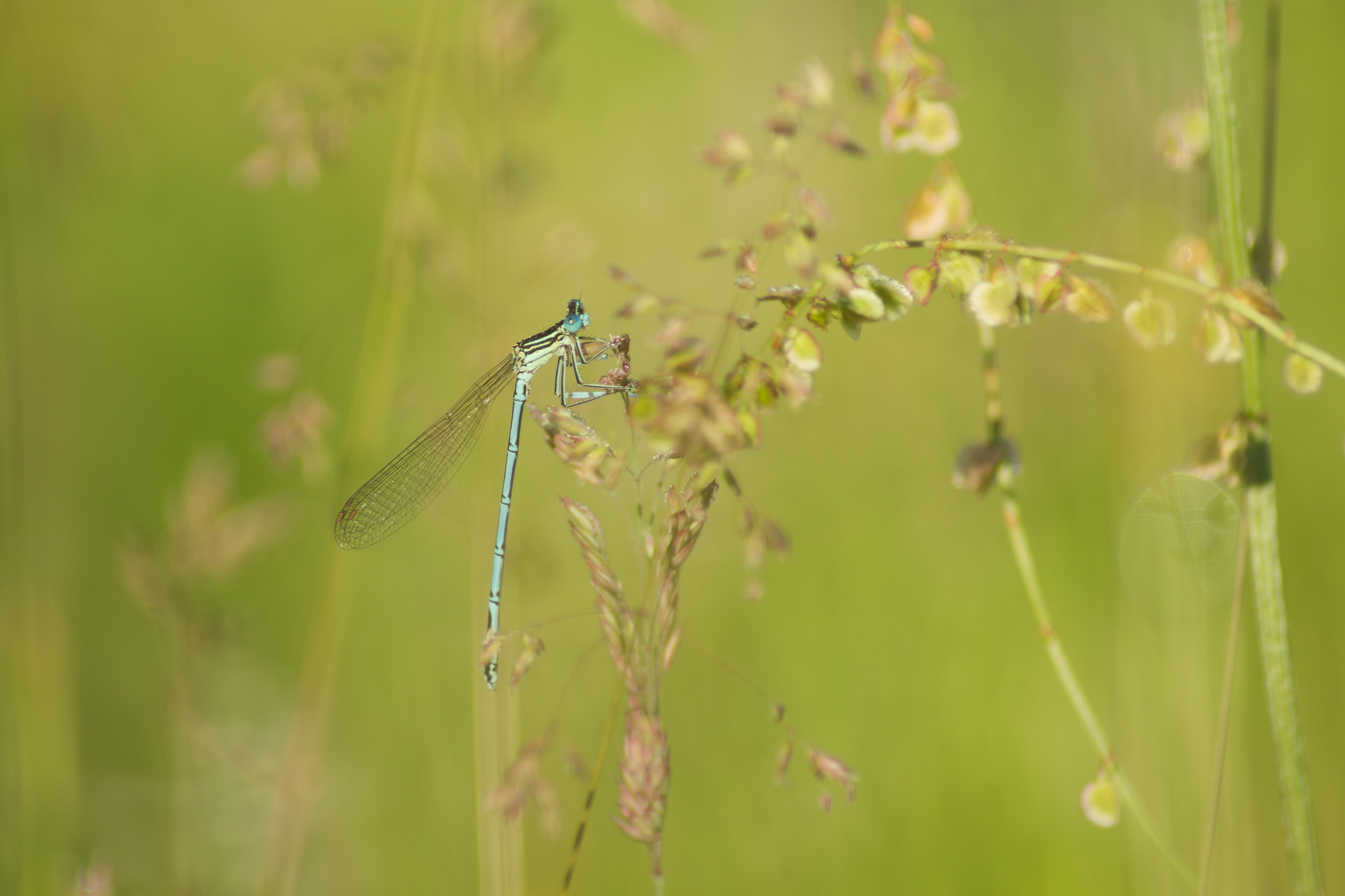 green dragonfly perched on green leafed plant in close-up photography