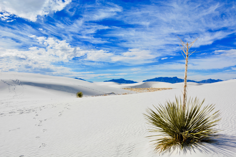 linear green leafed plant on desert under blue sky during daytime