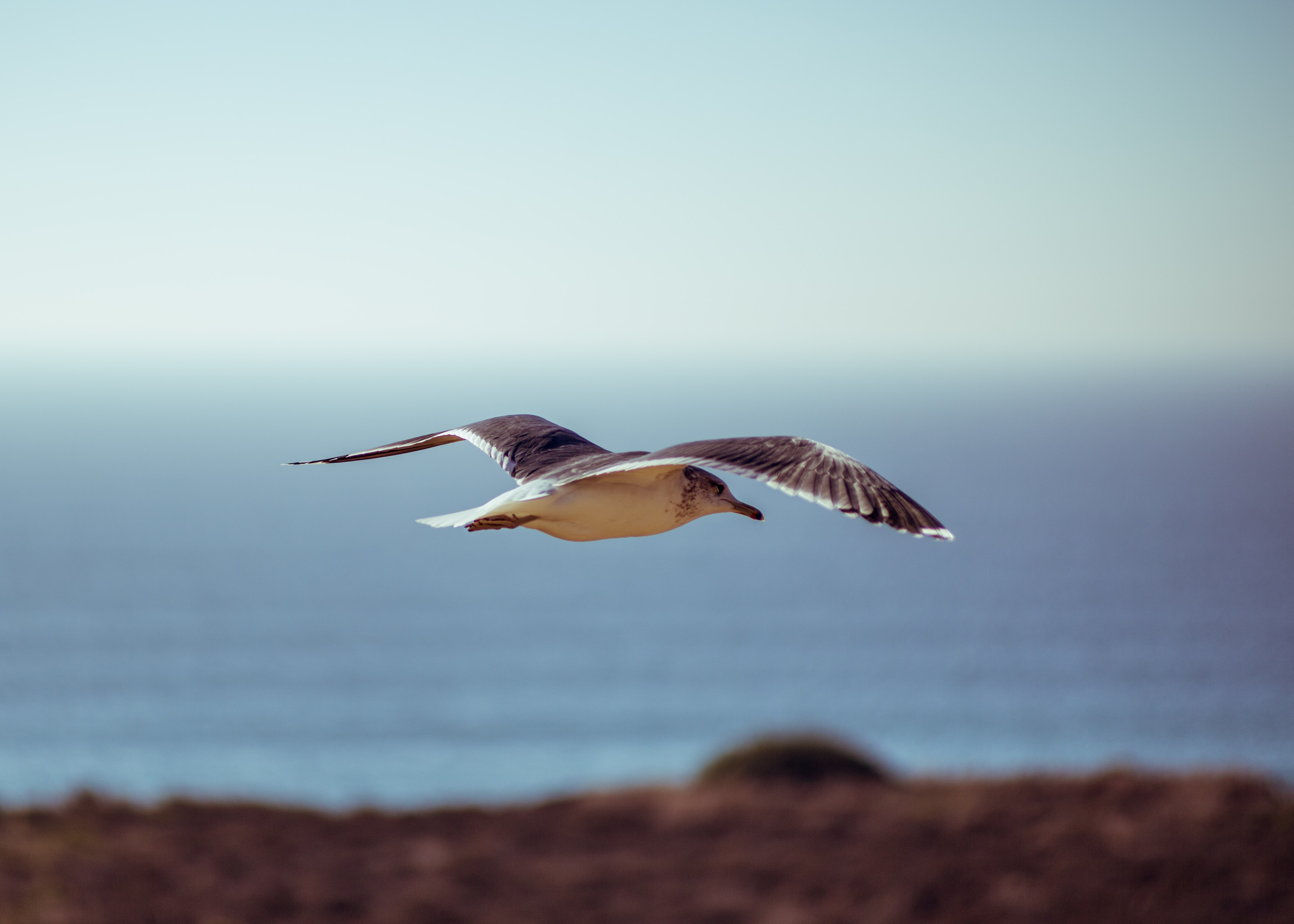 macro photography of brown bird