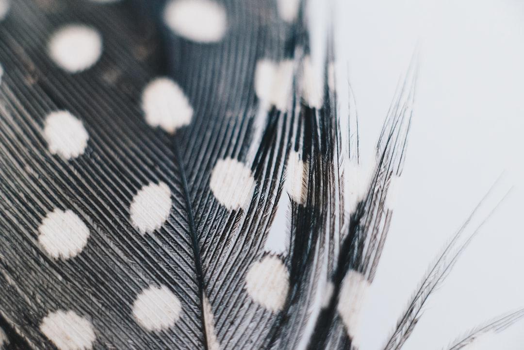 Macro shot of Guinea Feather