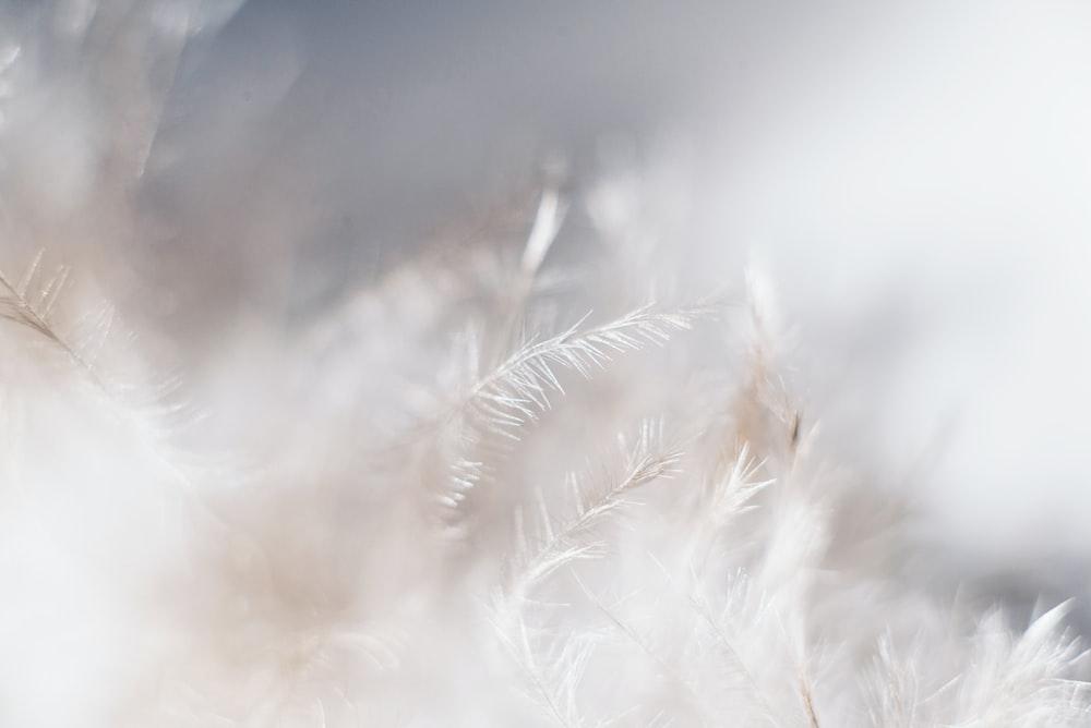 closeup photo of white leaves