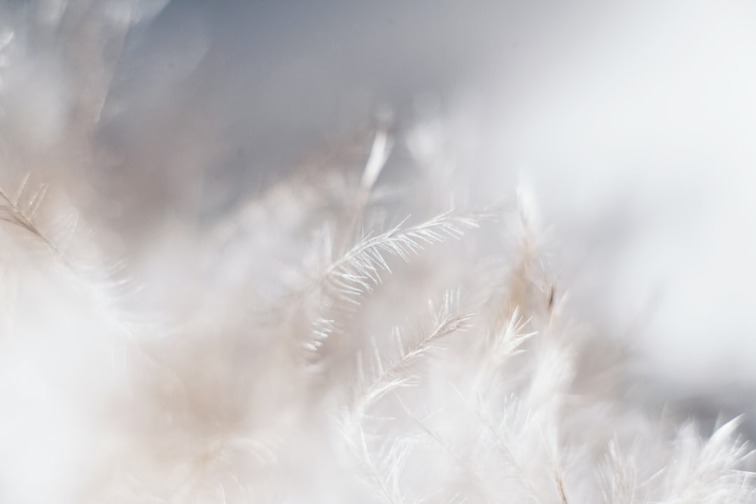 Macro shot of White Feather