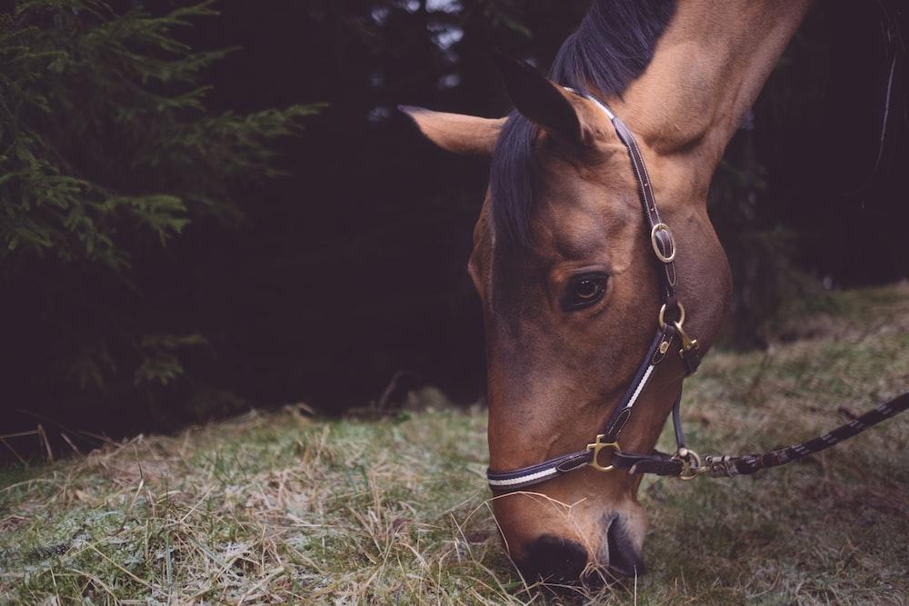 tilt-shift photography of horse