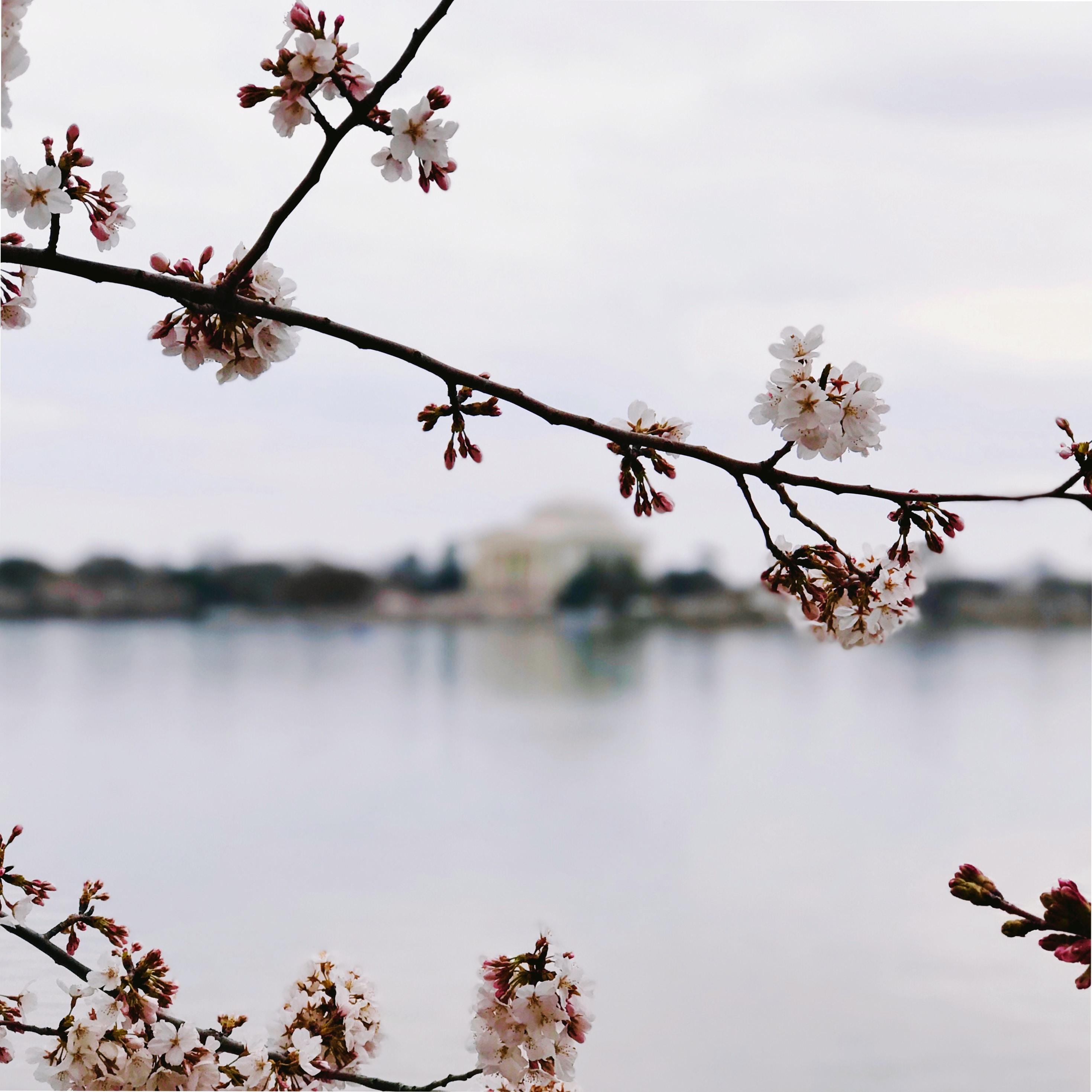 tilt-shift photography of sakura tree