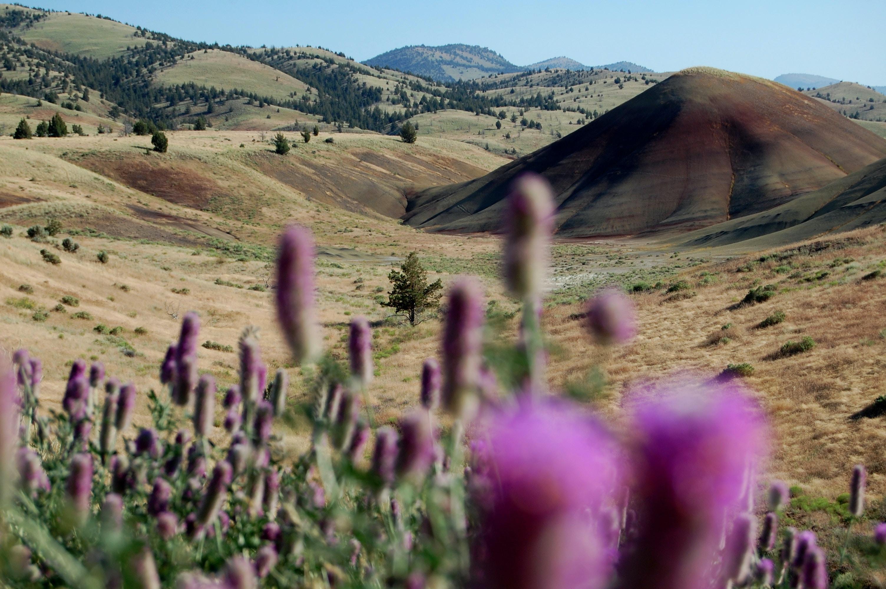 purple flowering plant near valley