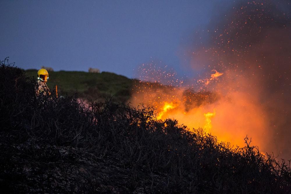 dried twigs on fire