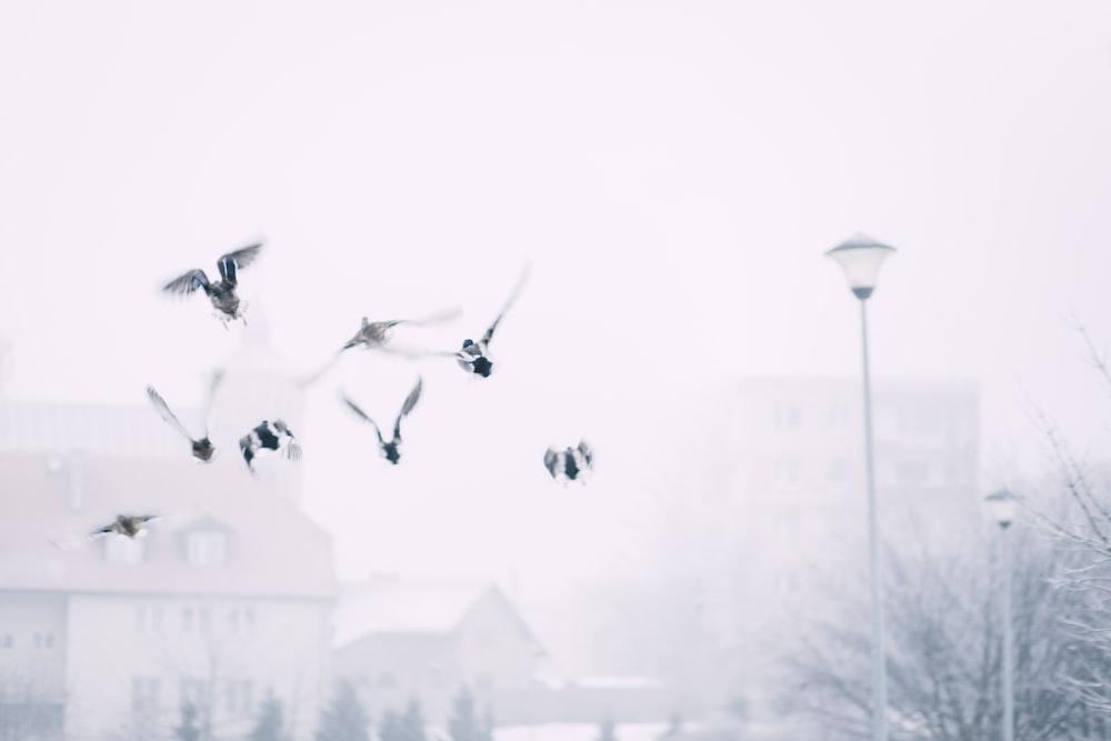 bird flying near post lamp