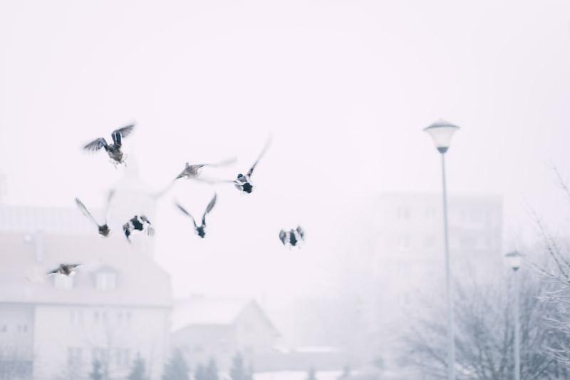 【藍月】第一百九十三話、願成為您的羽翼 #龍族組