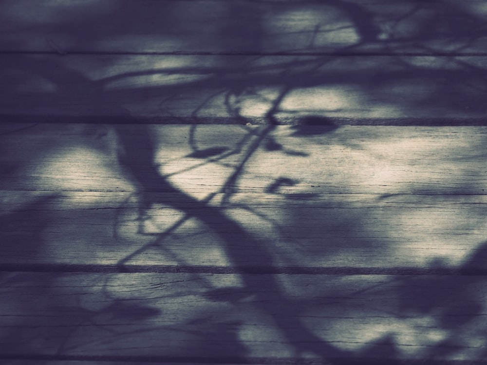 shadow of branch on white wooden board