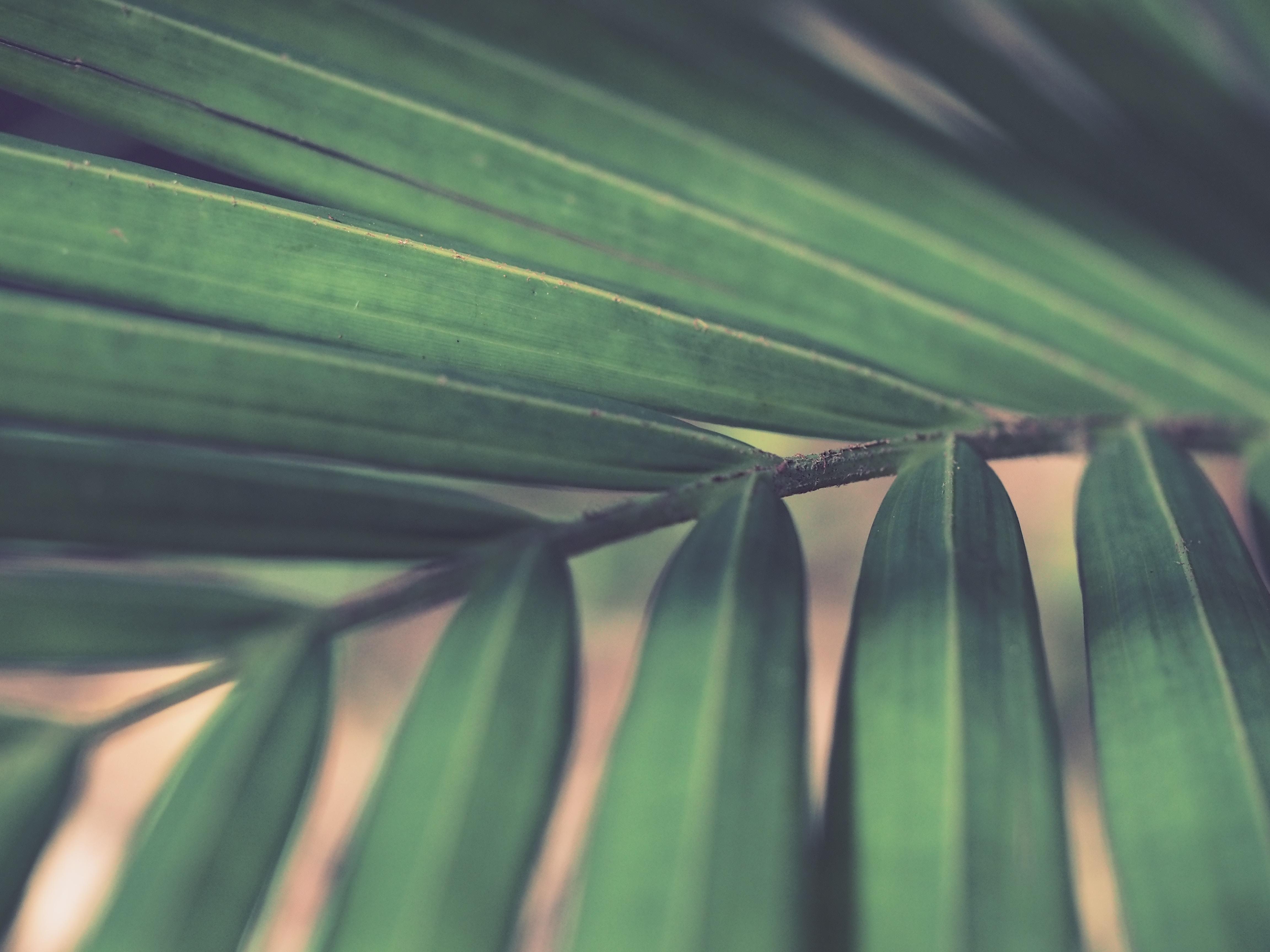 closeup photo of green palm leaf