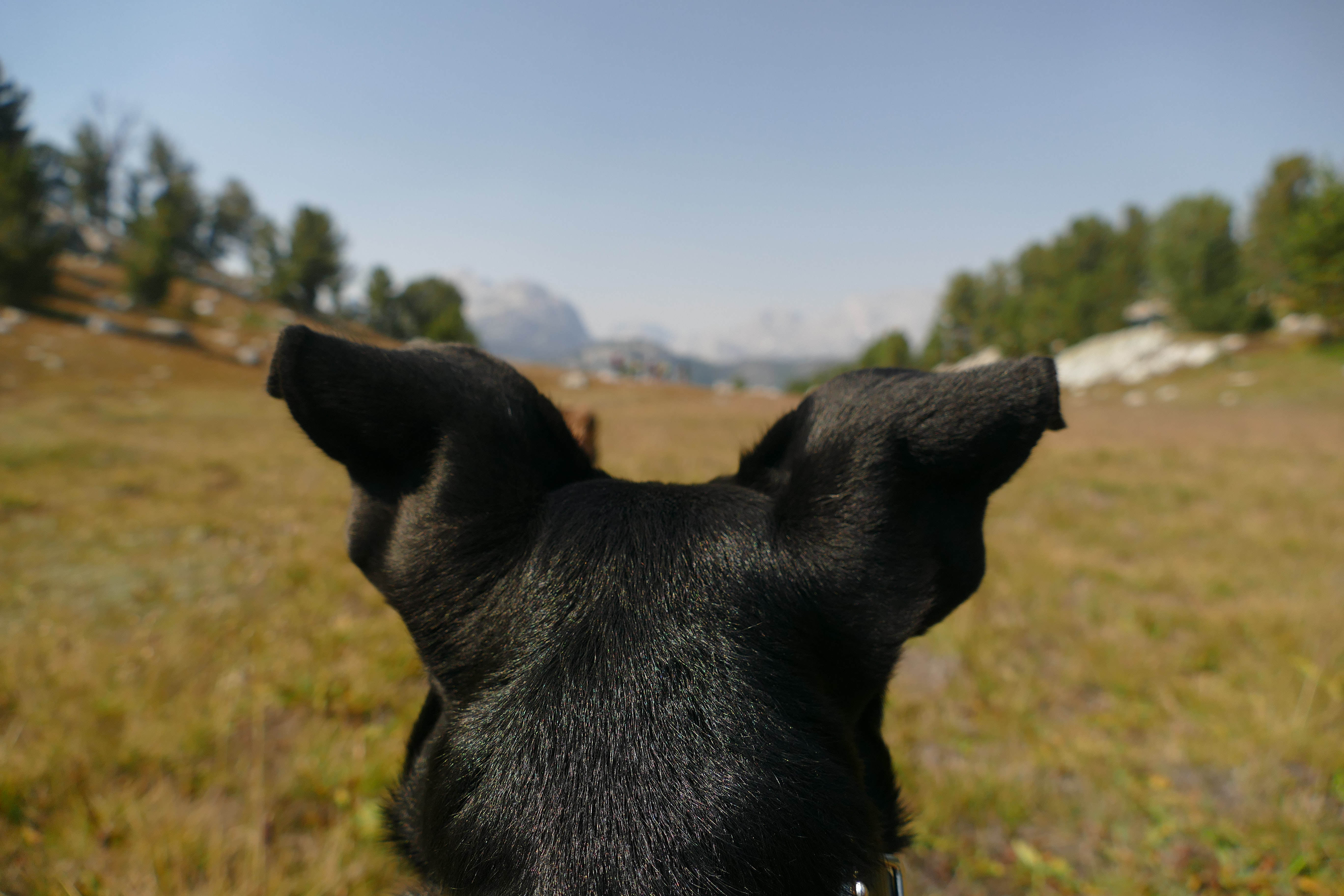 dog's perspective