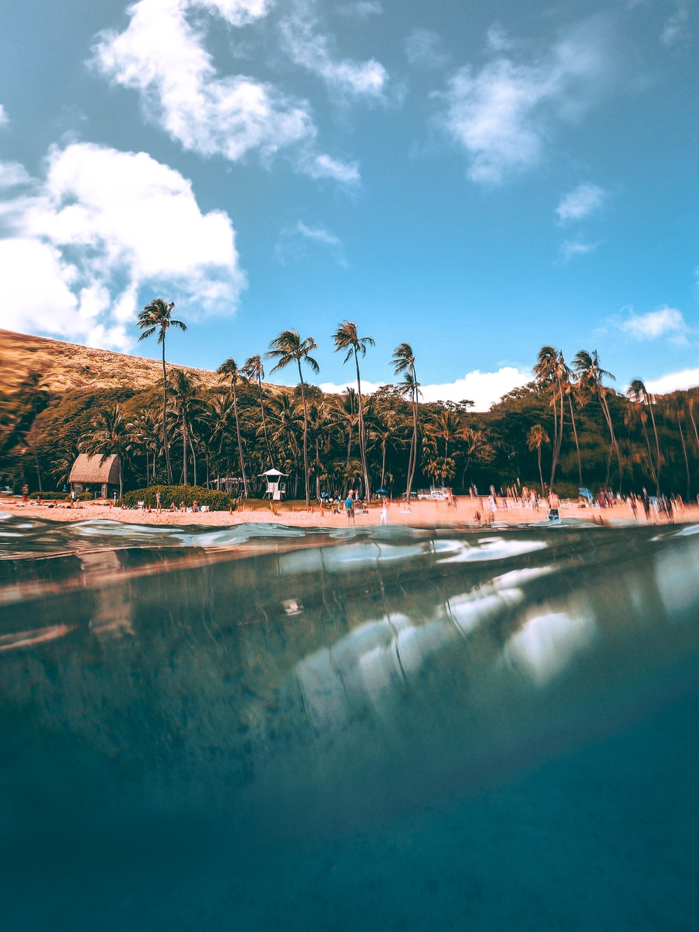 coconut trees reflecting on still body of water