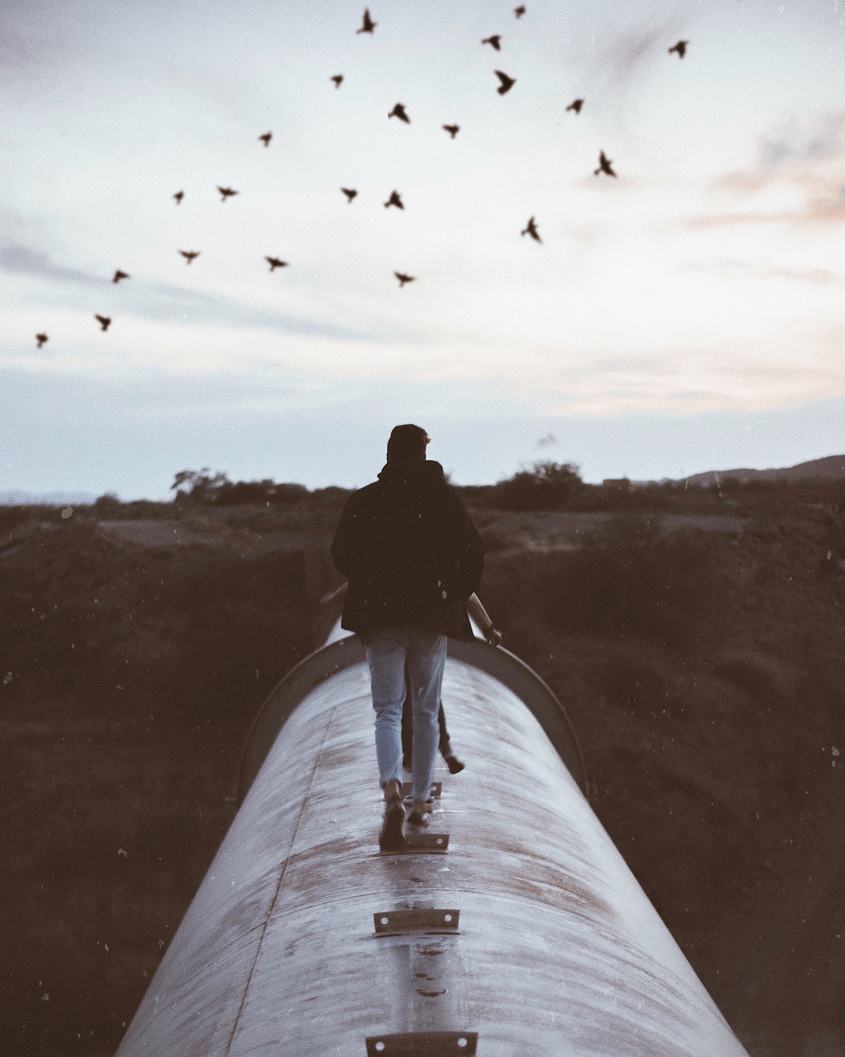 person standing on gray metal pipe under flying birds during daytime