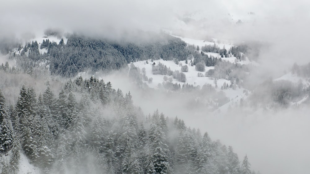 bird's eye view photo of tall trees during winter