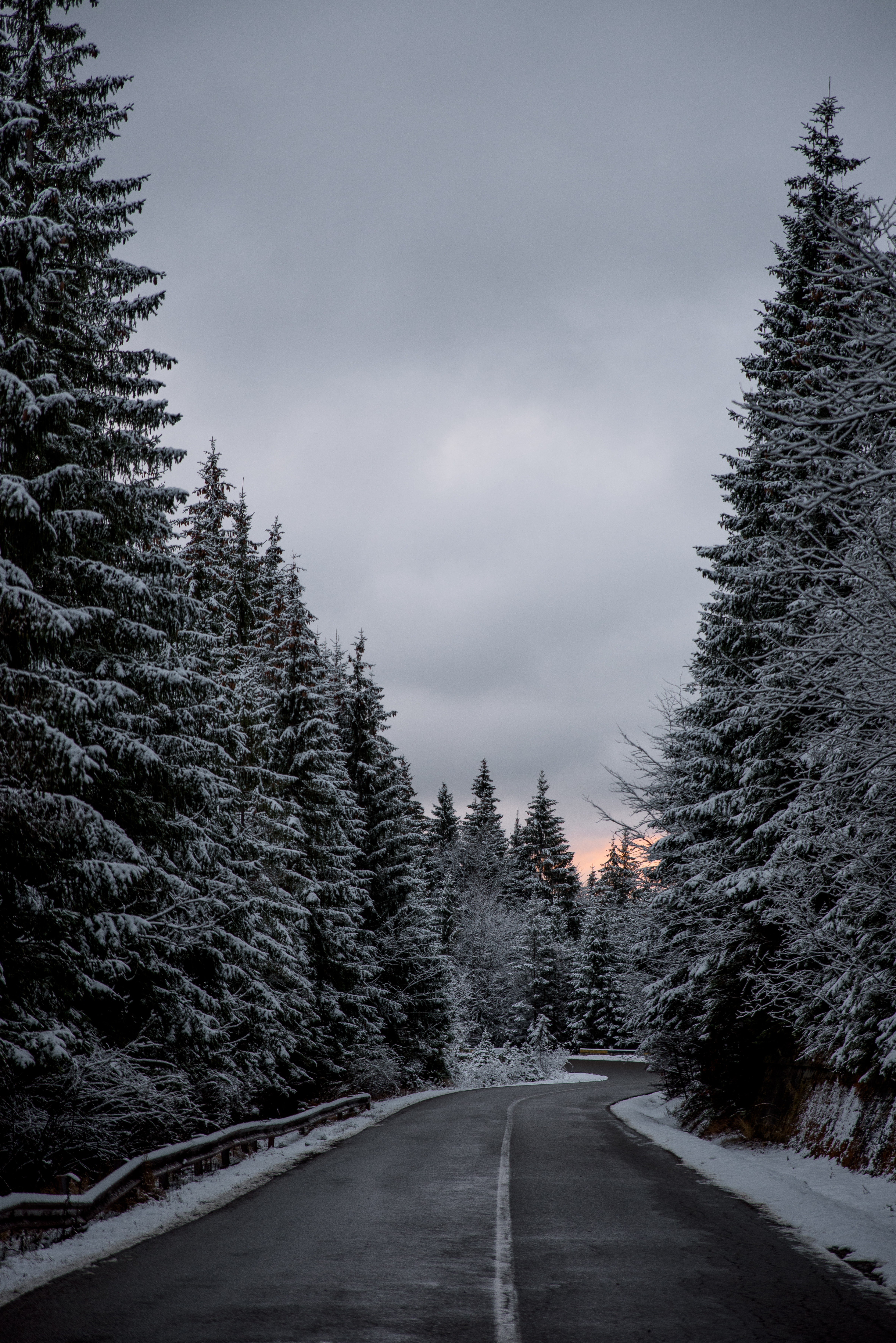 snow covered forest and road