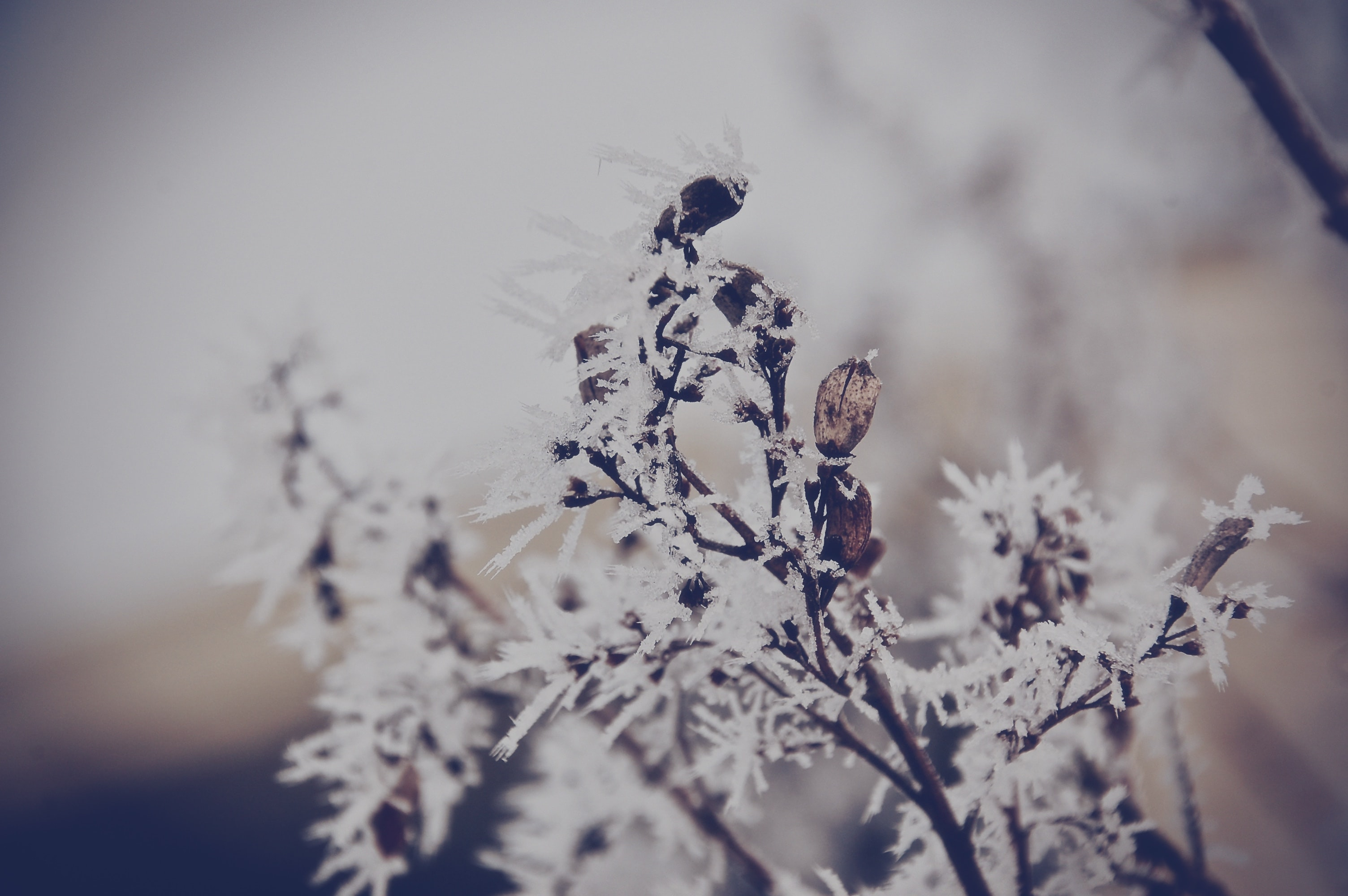 shallow focus photography of white leafed plant