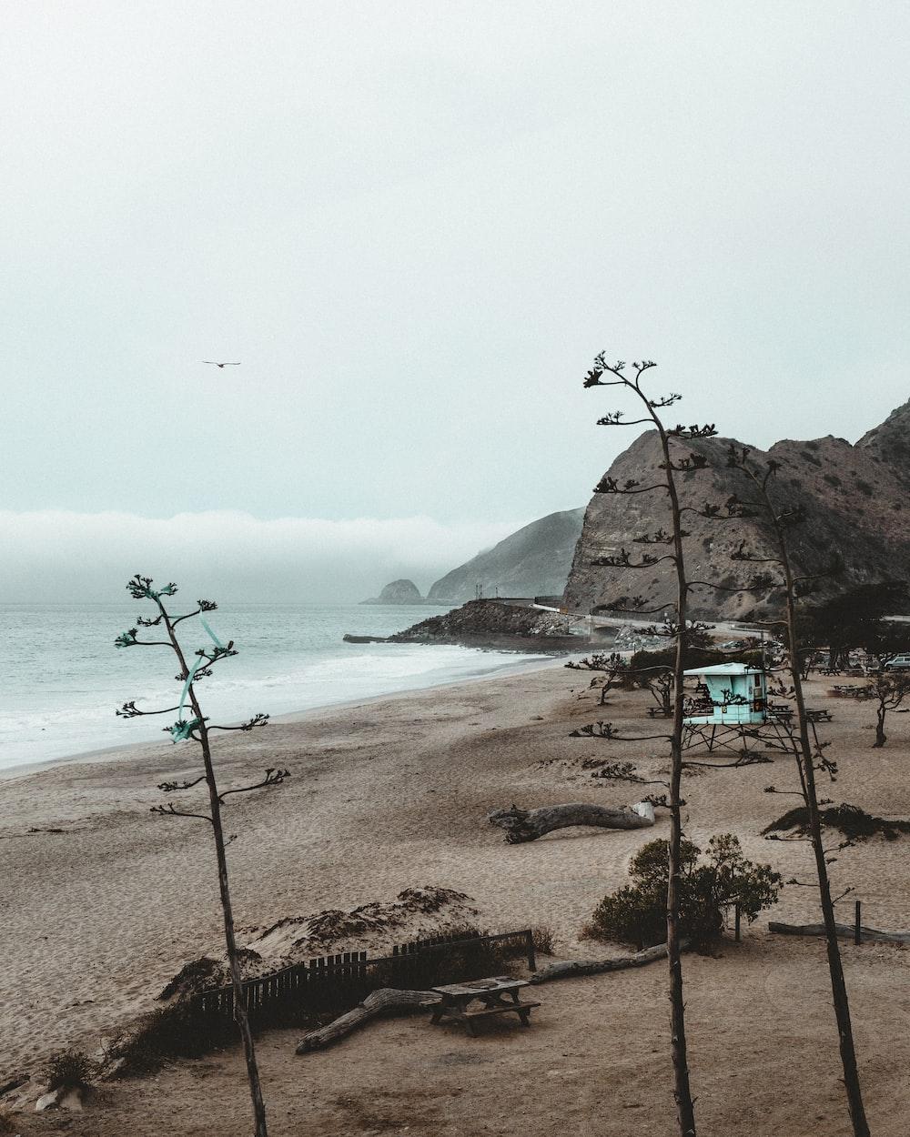 brown shore near mountain