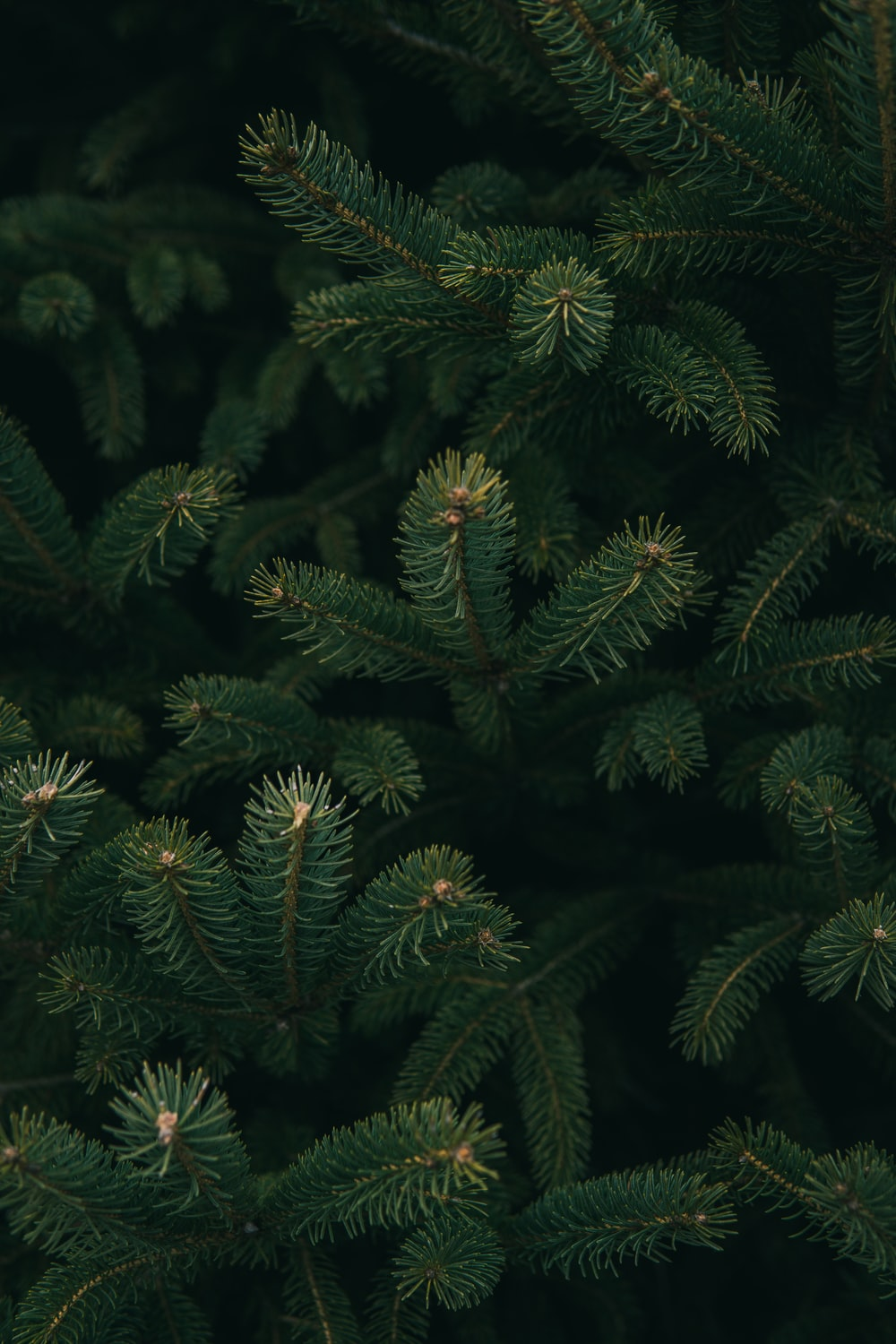 close up photo of green Christmas tree