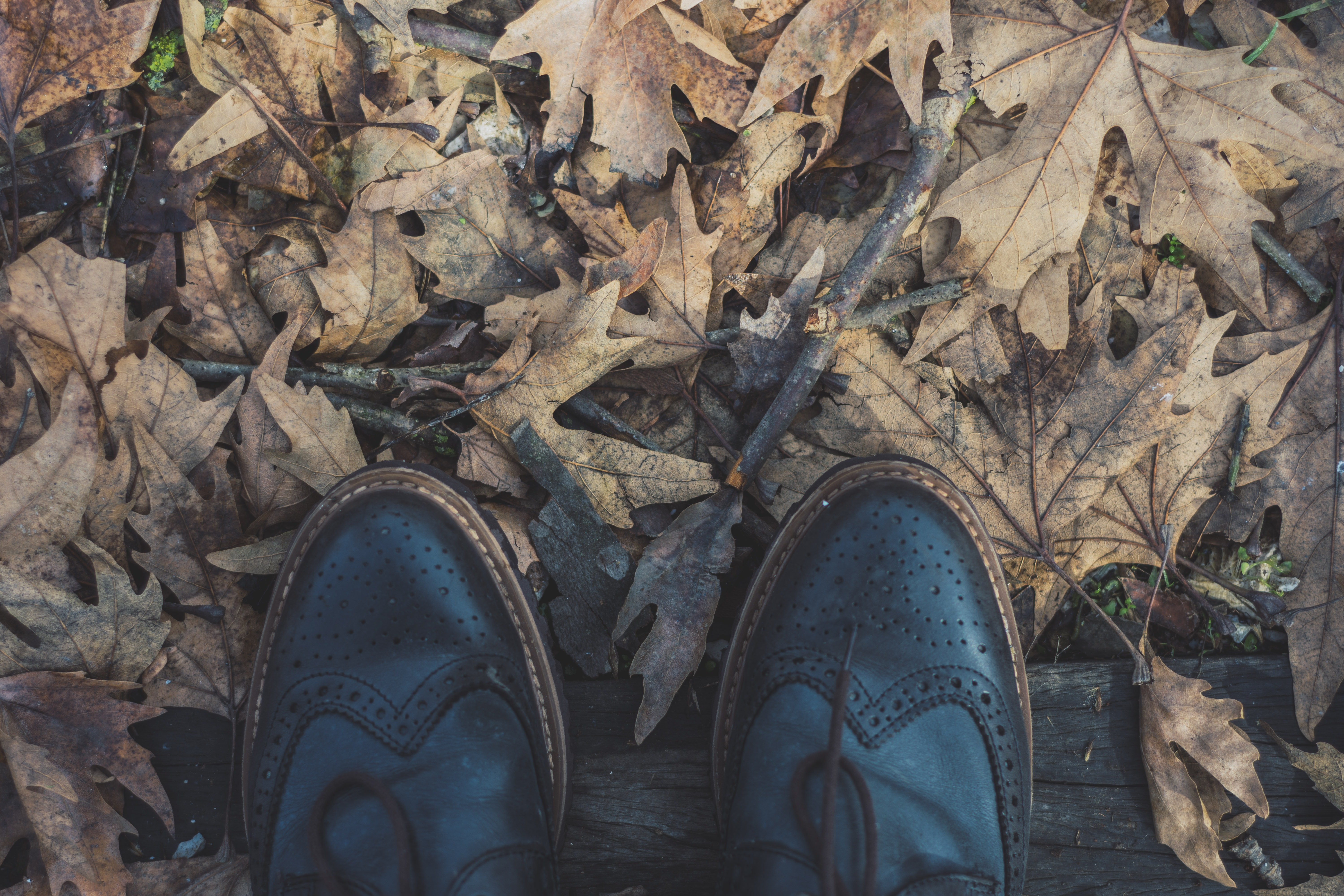 pair of black leather wingtip shoes on dried leaves