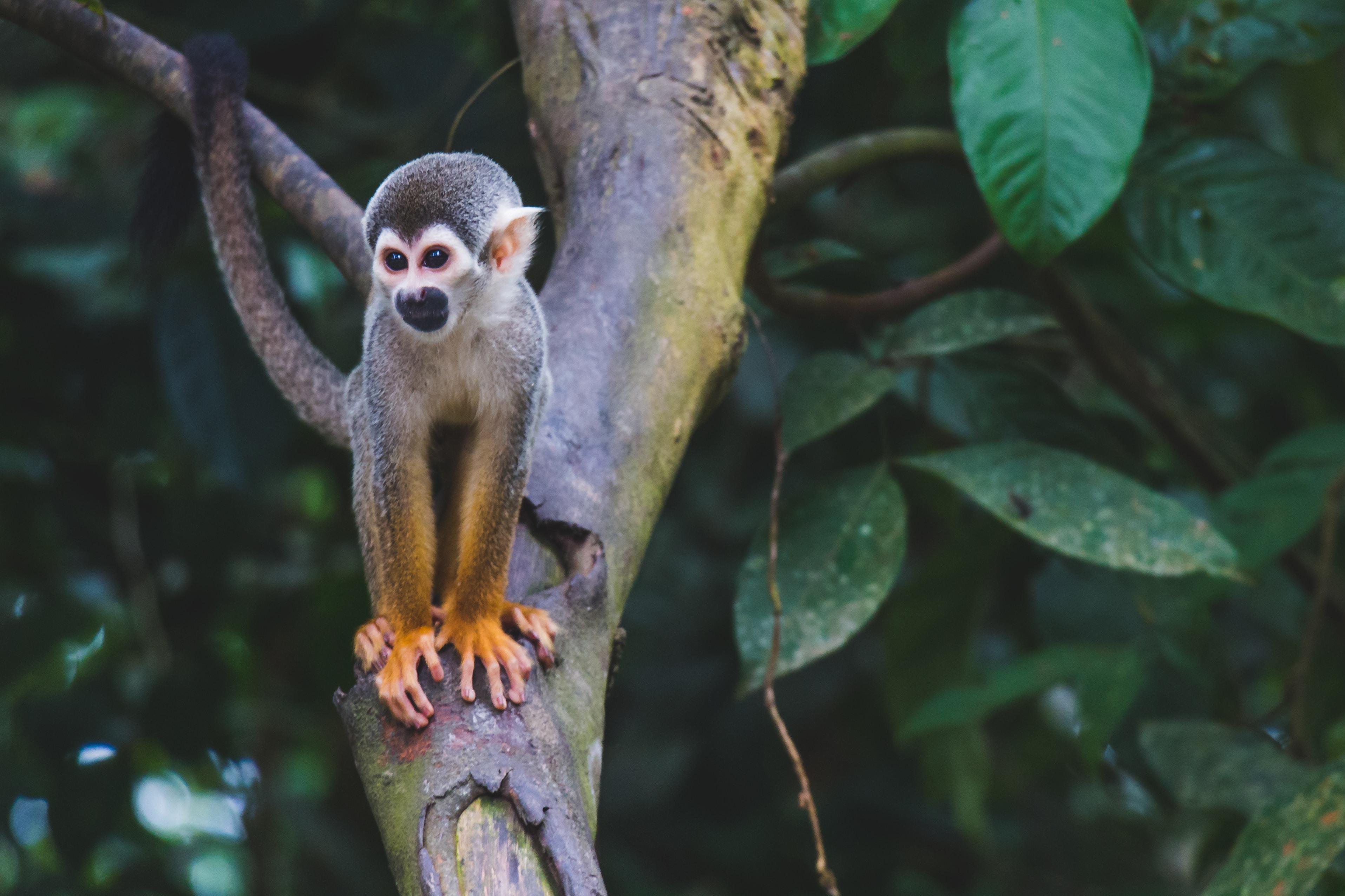 brown monkey in tree