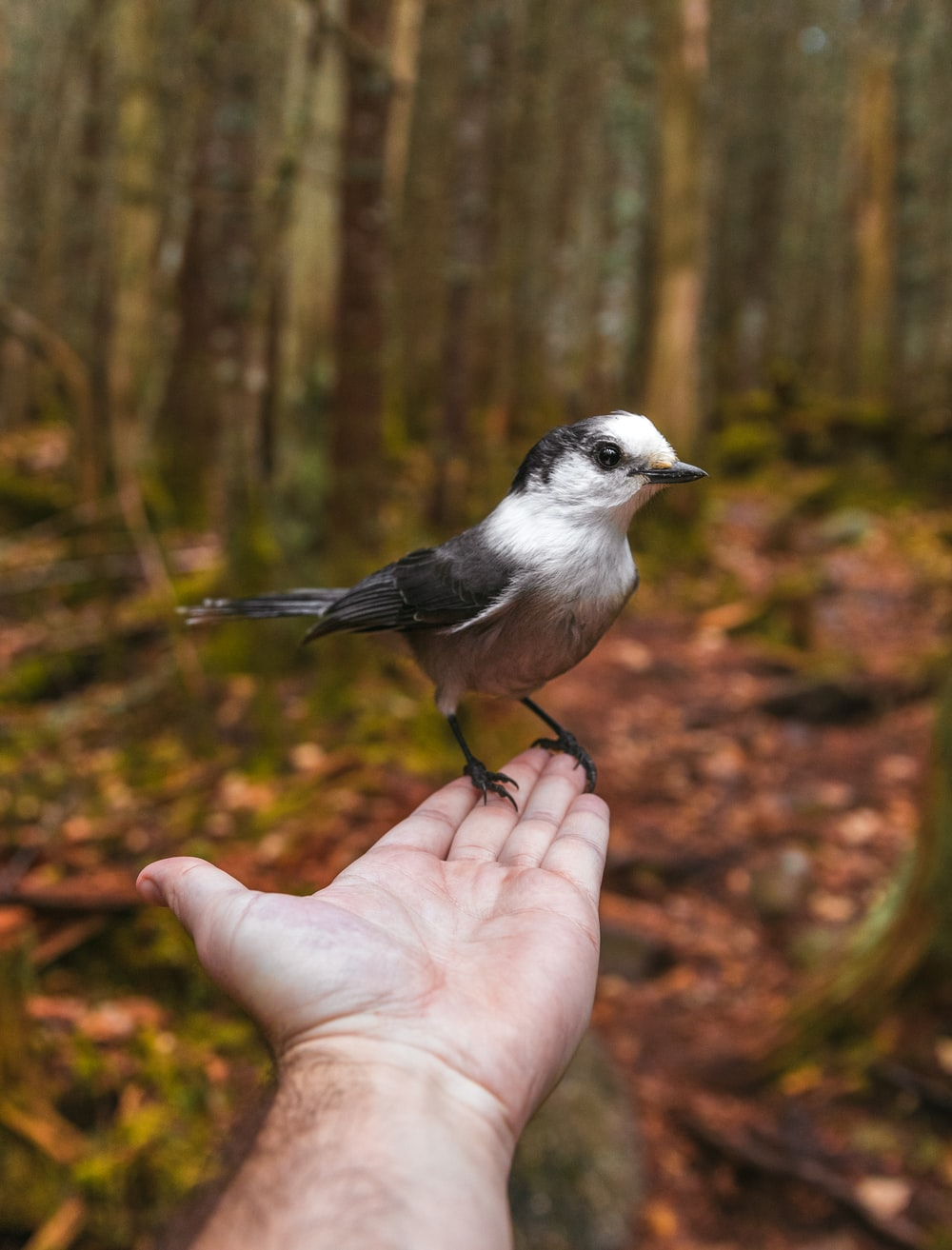 black and white bird on person's hand