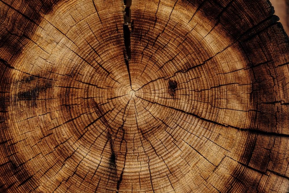 photo of brown wood slab