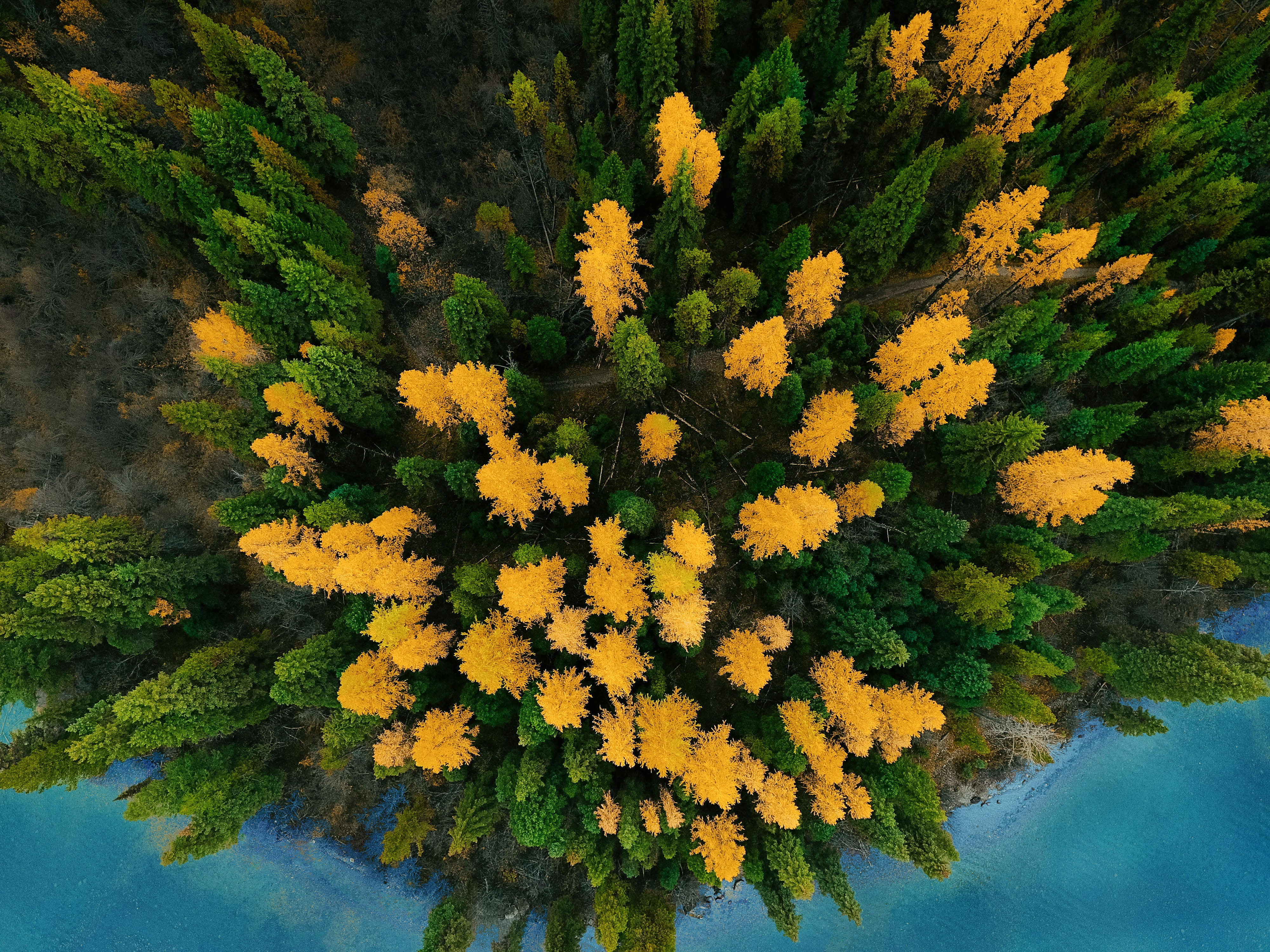 bird's-eye view of green and yellow leafed trees