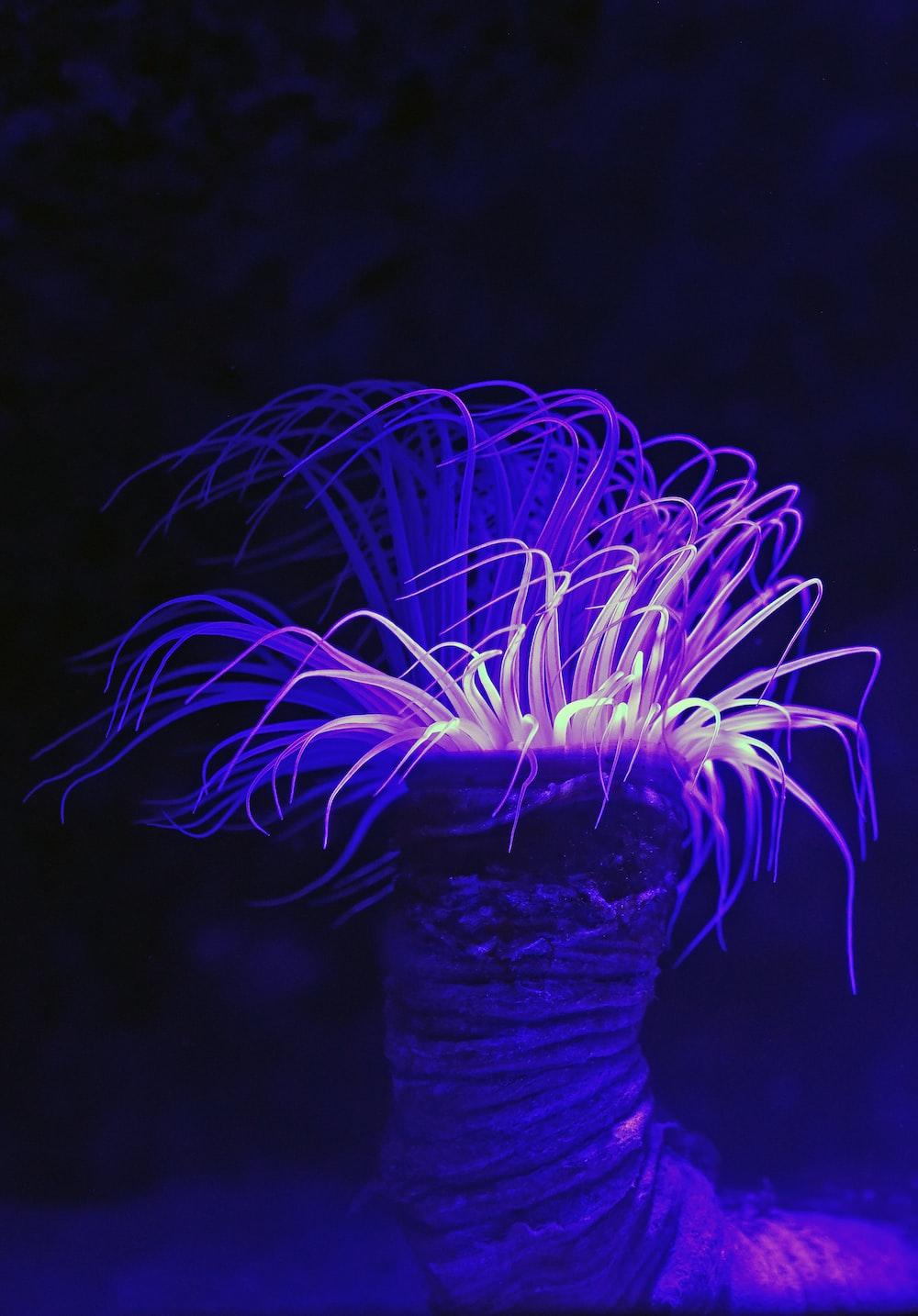 purple long leafed plant
