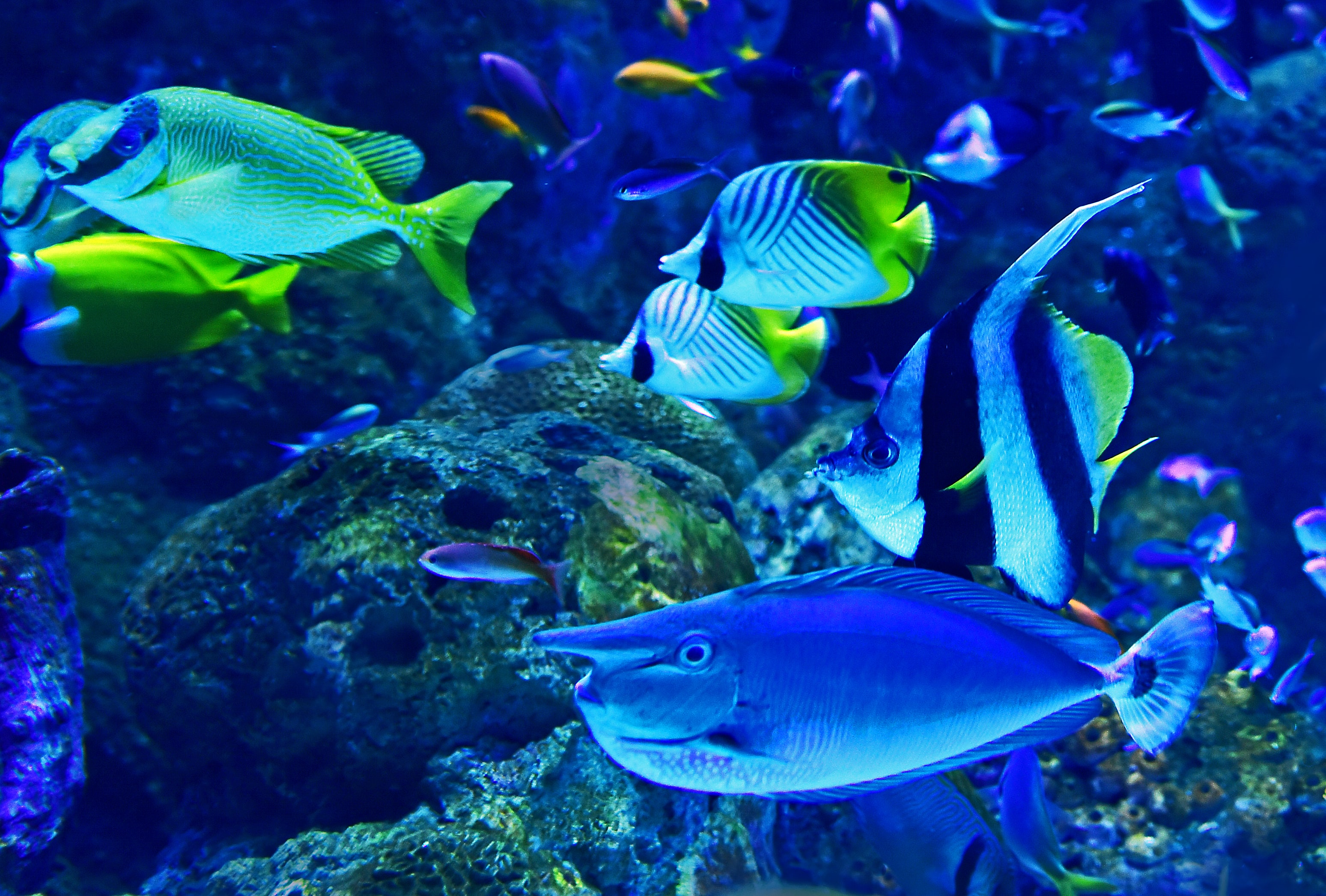 shoal of fish near coral