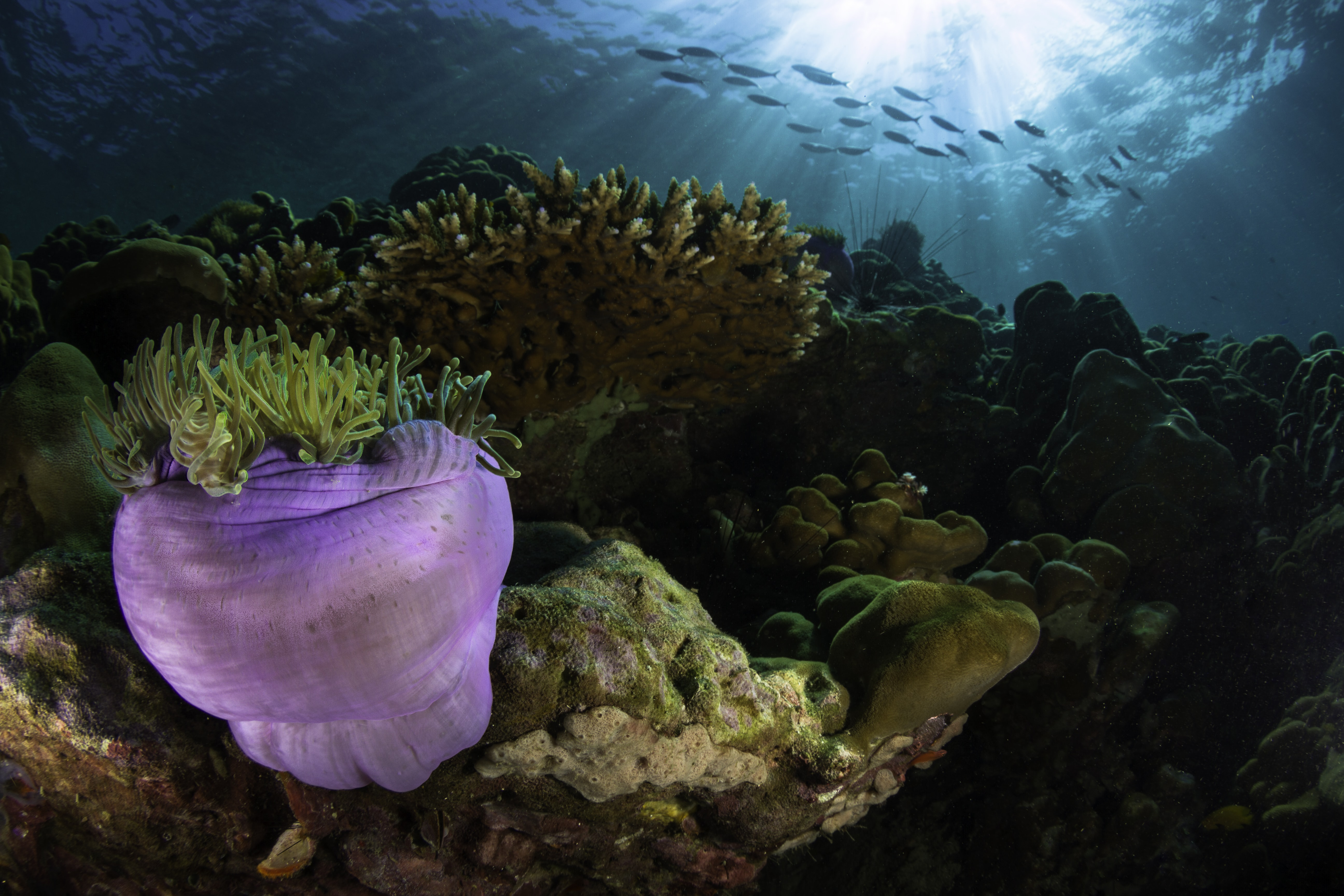 purple and green coral reef