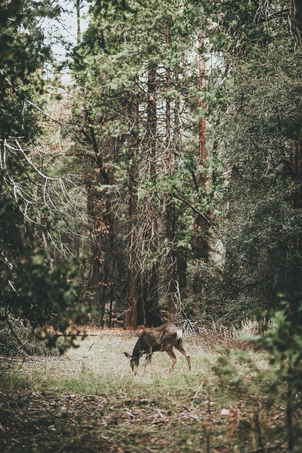 photograph of deer on woods
