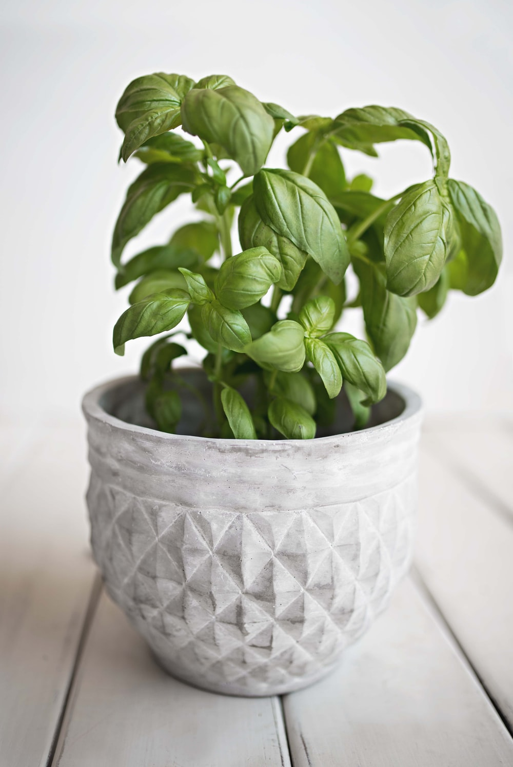 green leafed plant on white pot