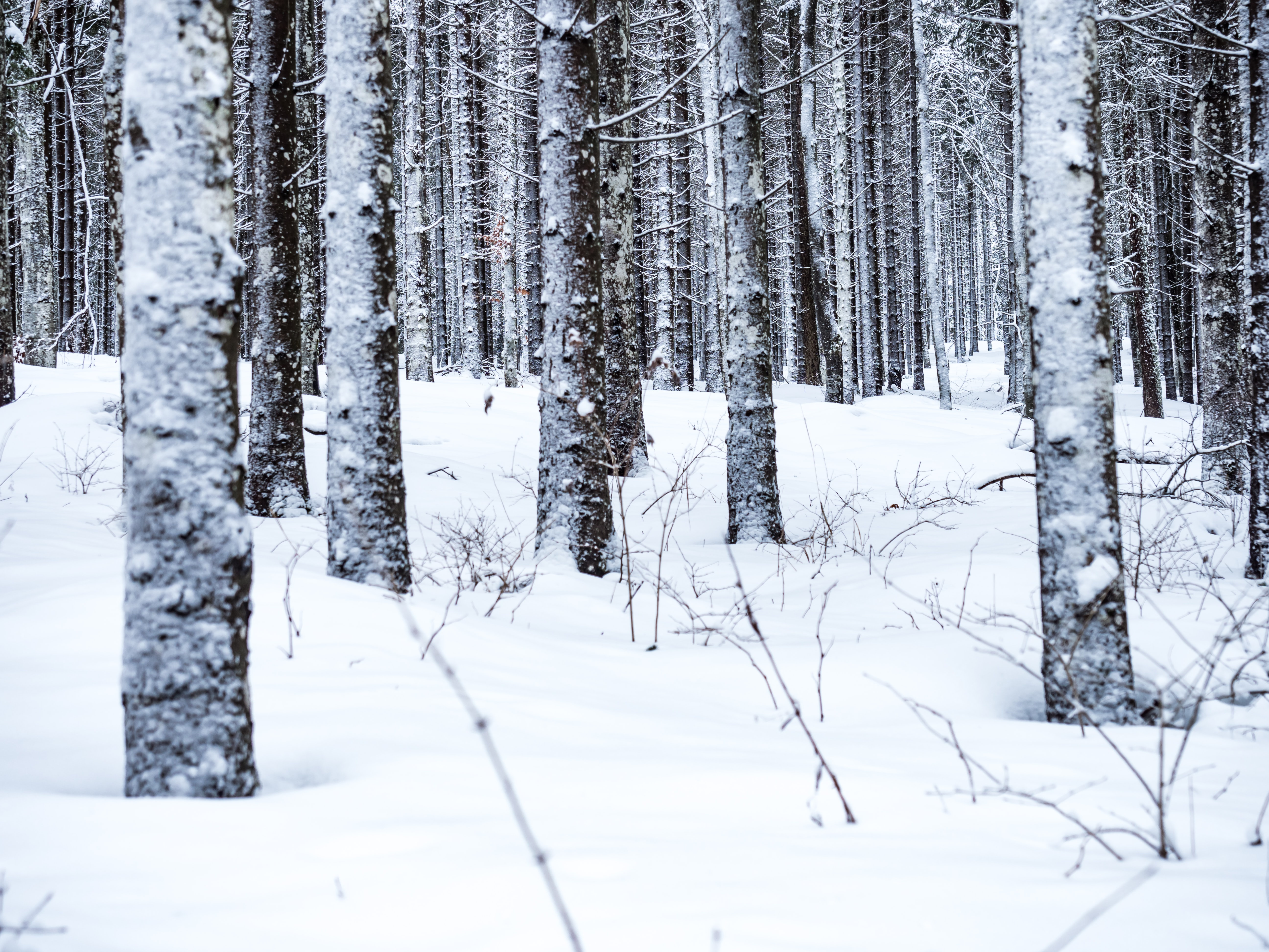 photo of trees covered with snow