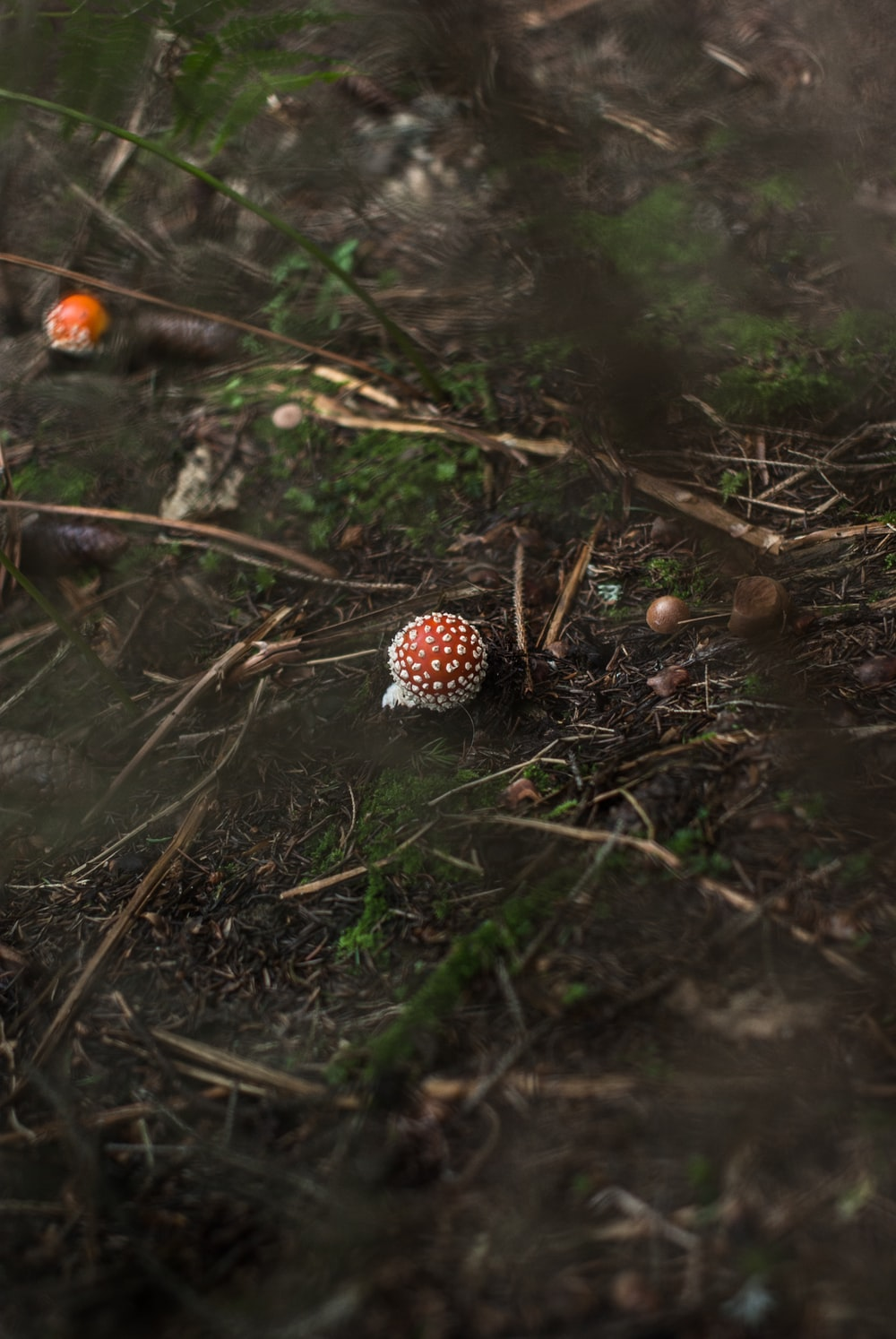 mushroom sprout on grass