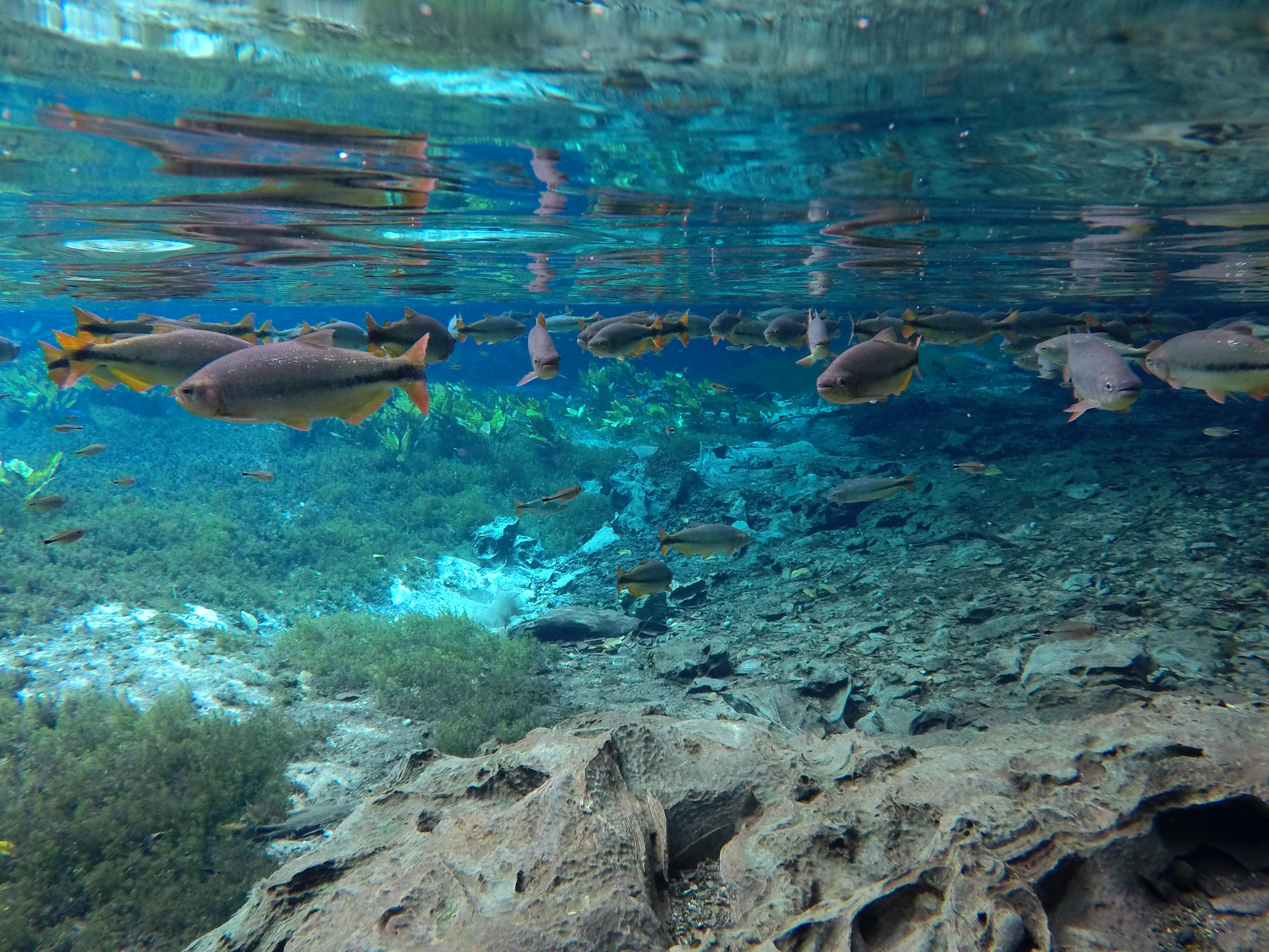 underwater photography of fishes