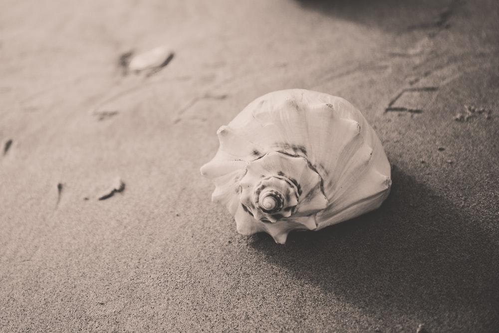 closeup photo of white seashell on sand