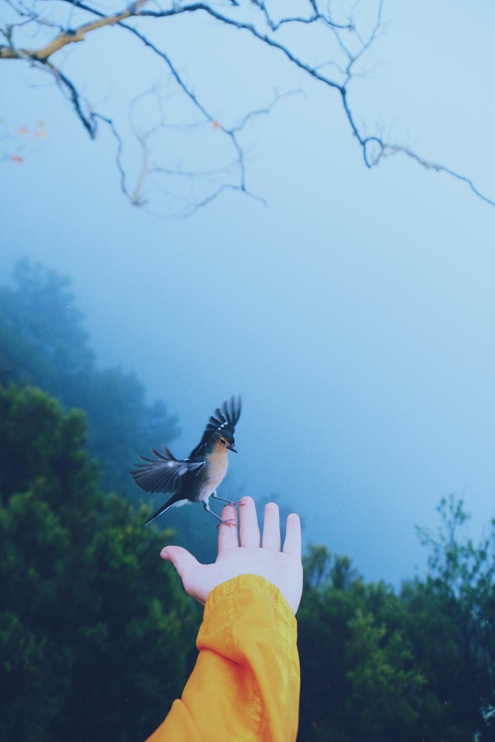 black and white bird perching on human hand