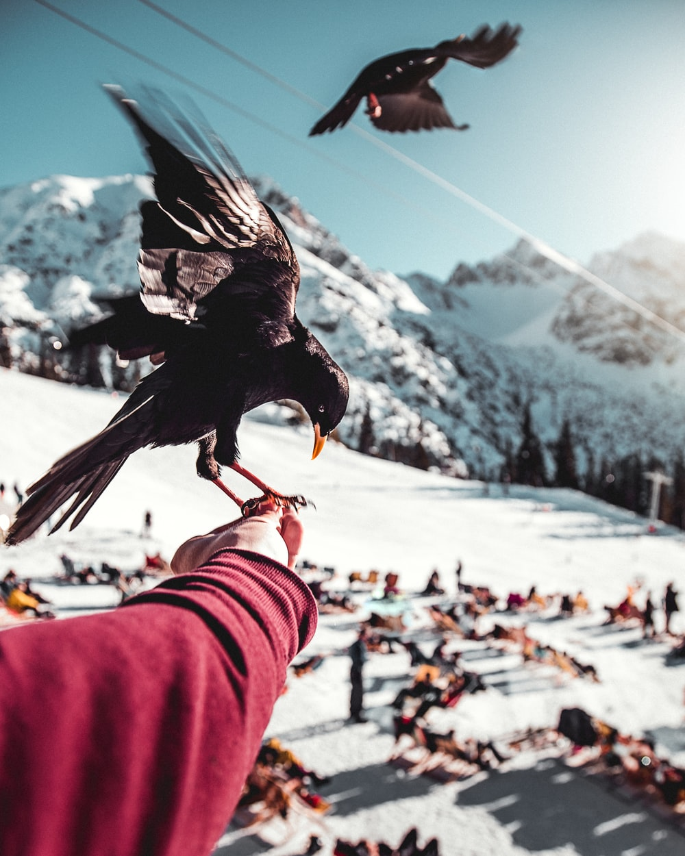short-beaked black bird perched on left human hand