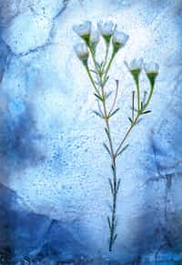 Icy Flowers poetry stories