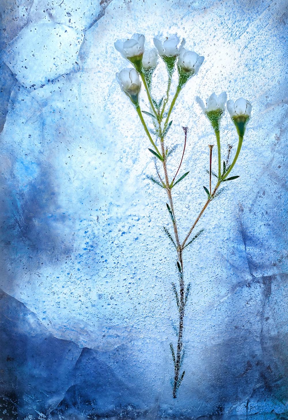 frozen white flowers