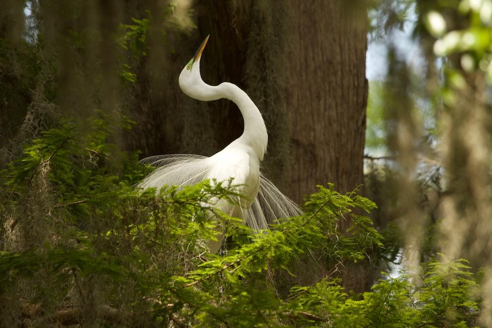 white bird on tree branch