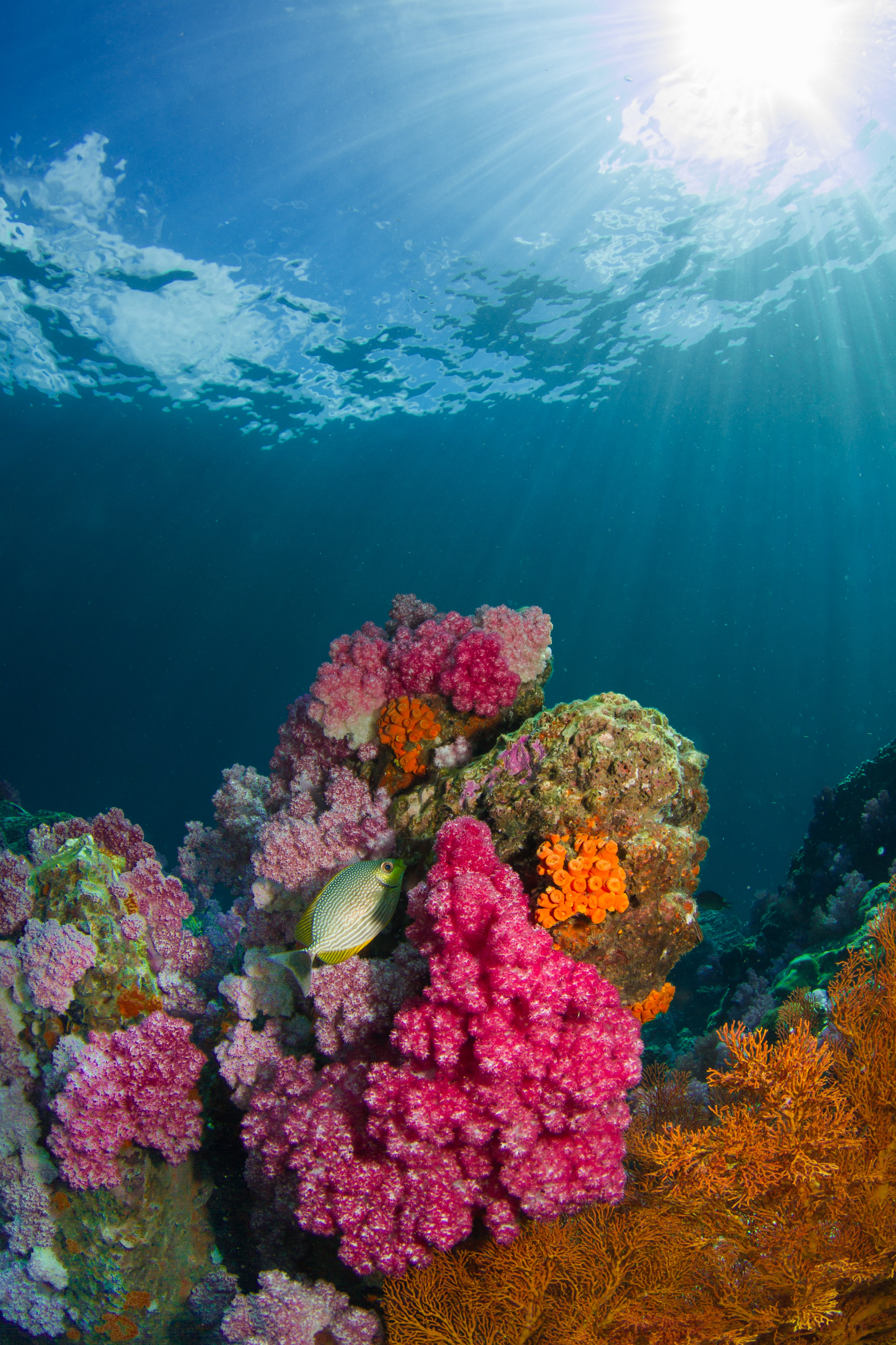 coral stories
