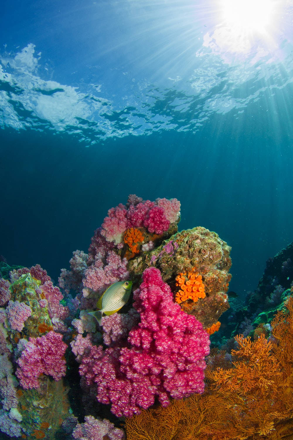 brown fish beside coral under body of water