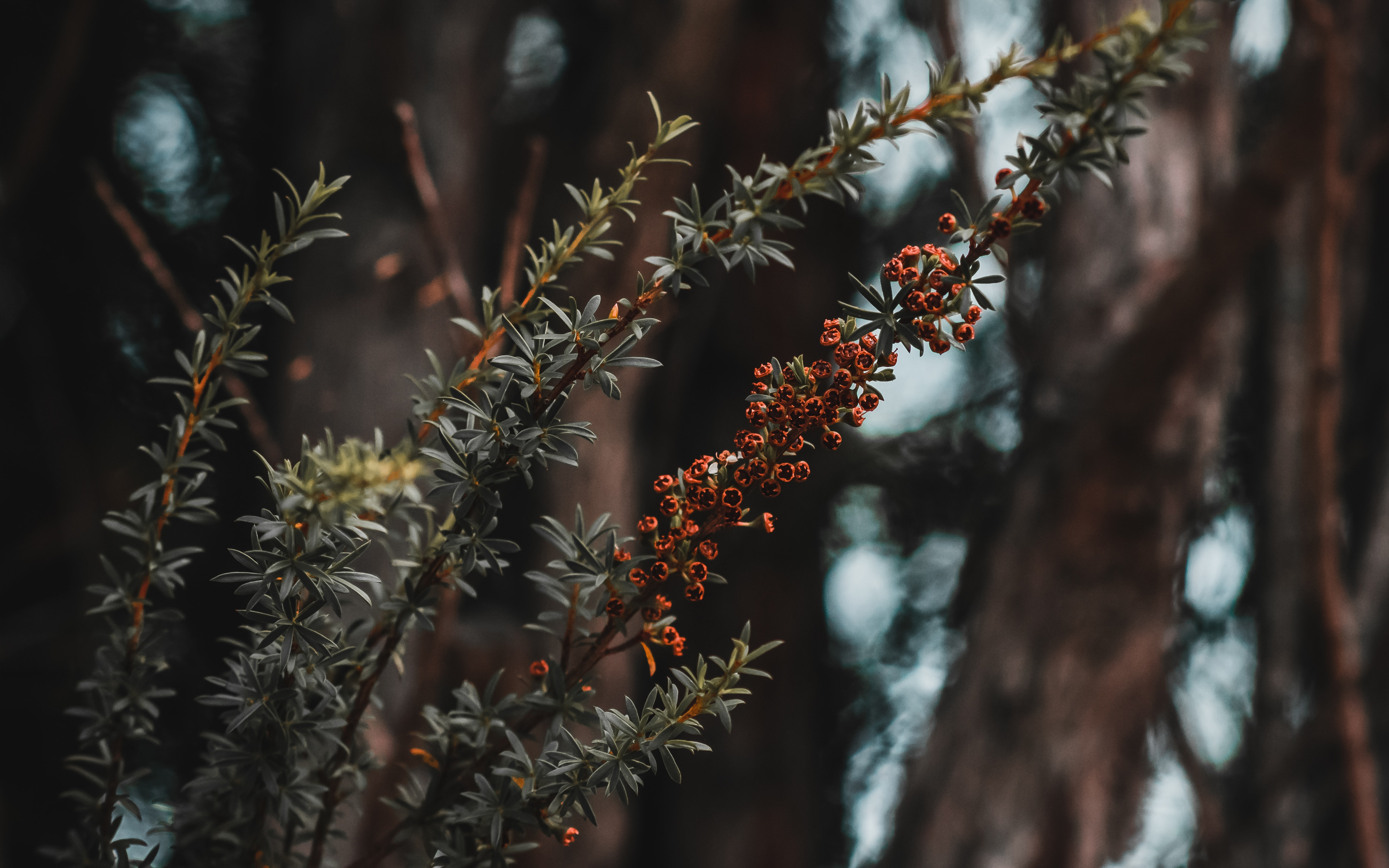 shallow focus photography of plants