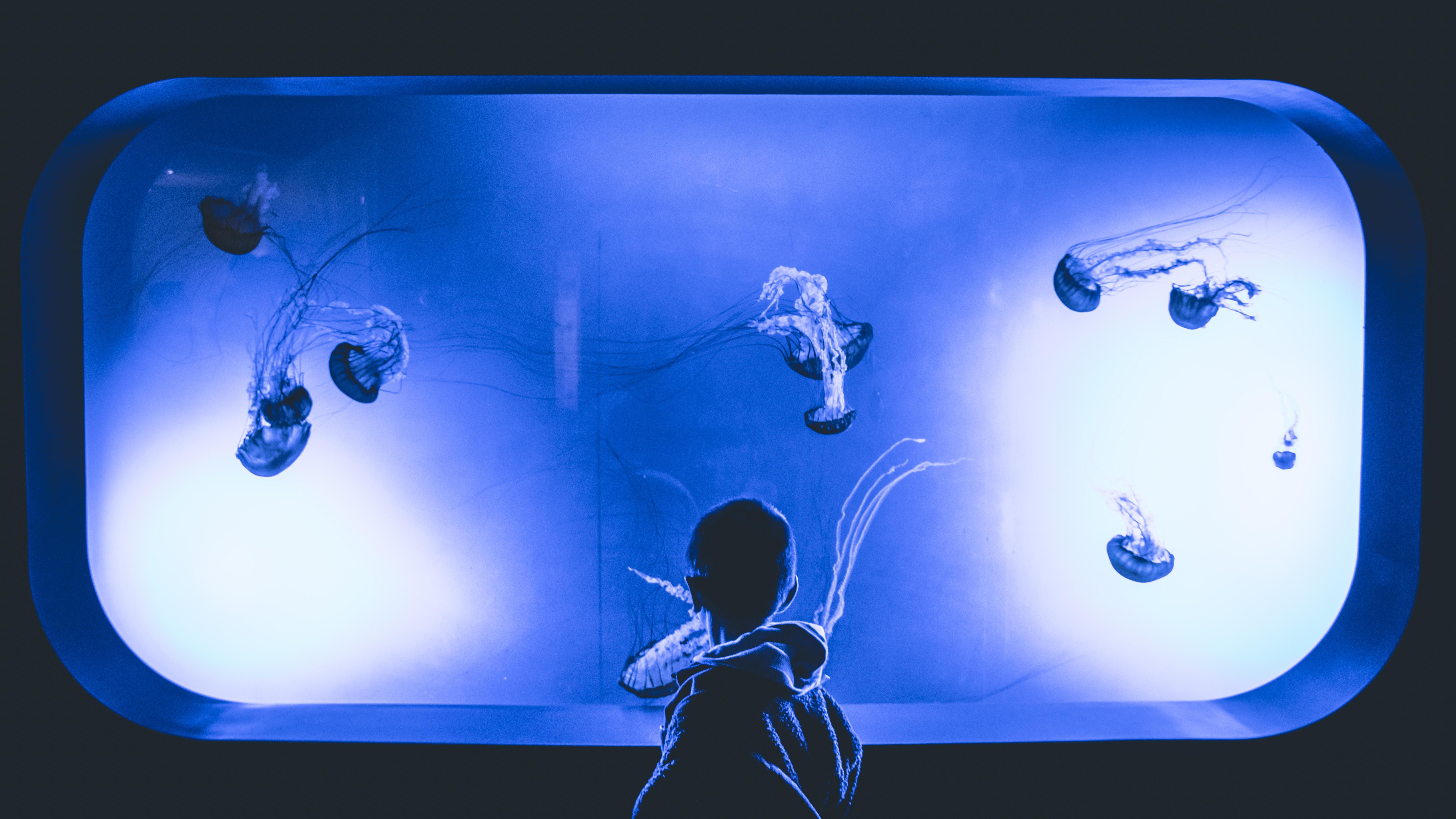 boy watching jelly fish