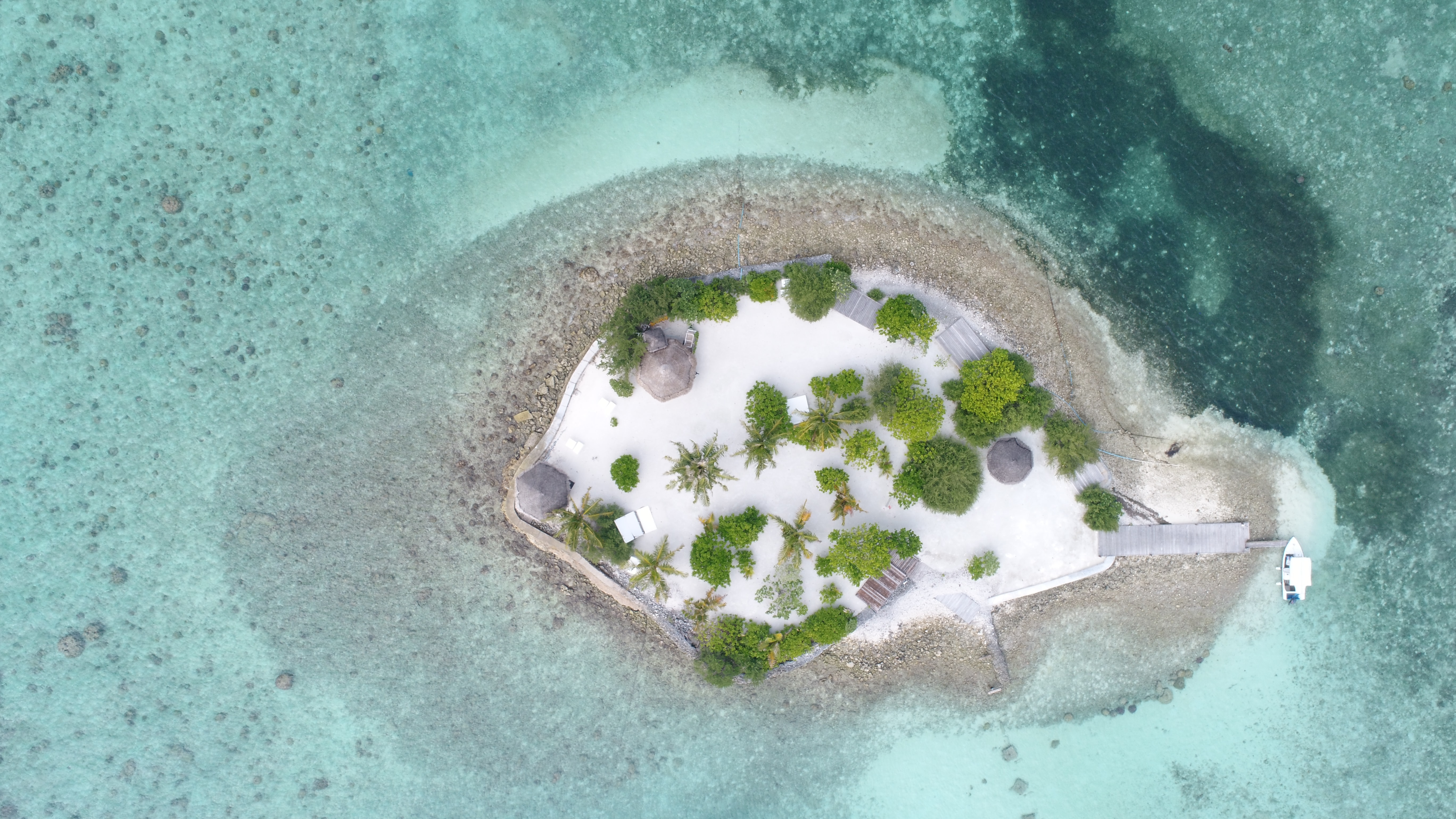 aerial view of islet with trees