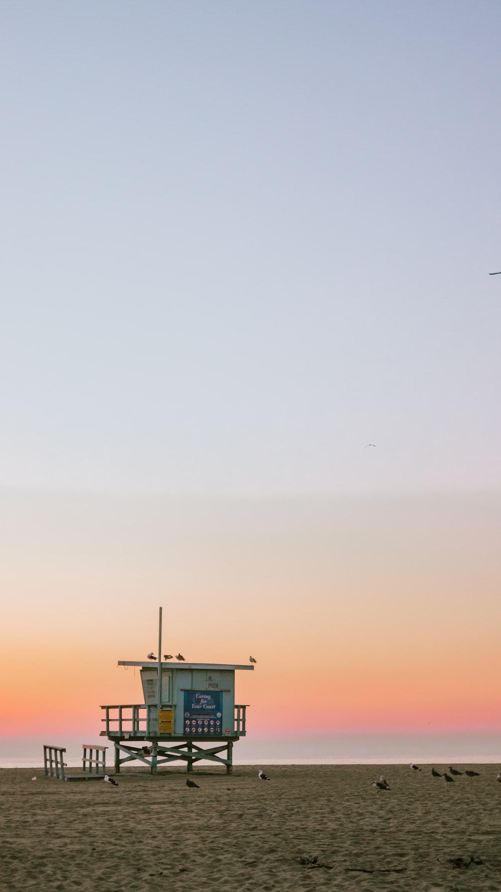 several birds on beach shore under blue sky