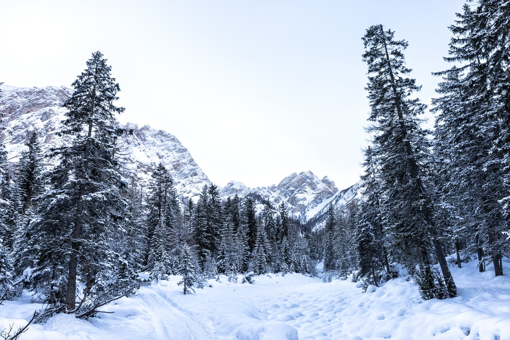 photo of trees covered in snow distant from mountain
